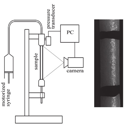 Fig. 2: The experimental inflation-extension set-up (left panel) and the picture of the sample from CCD camera (right panel).