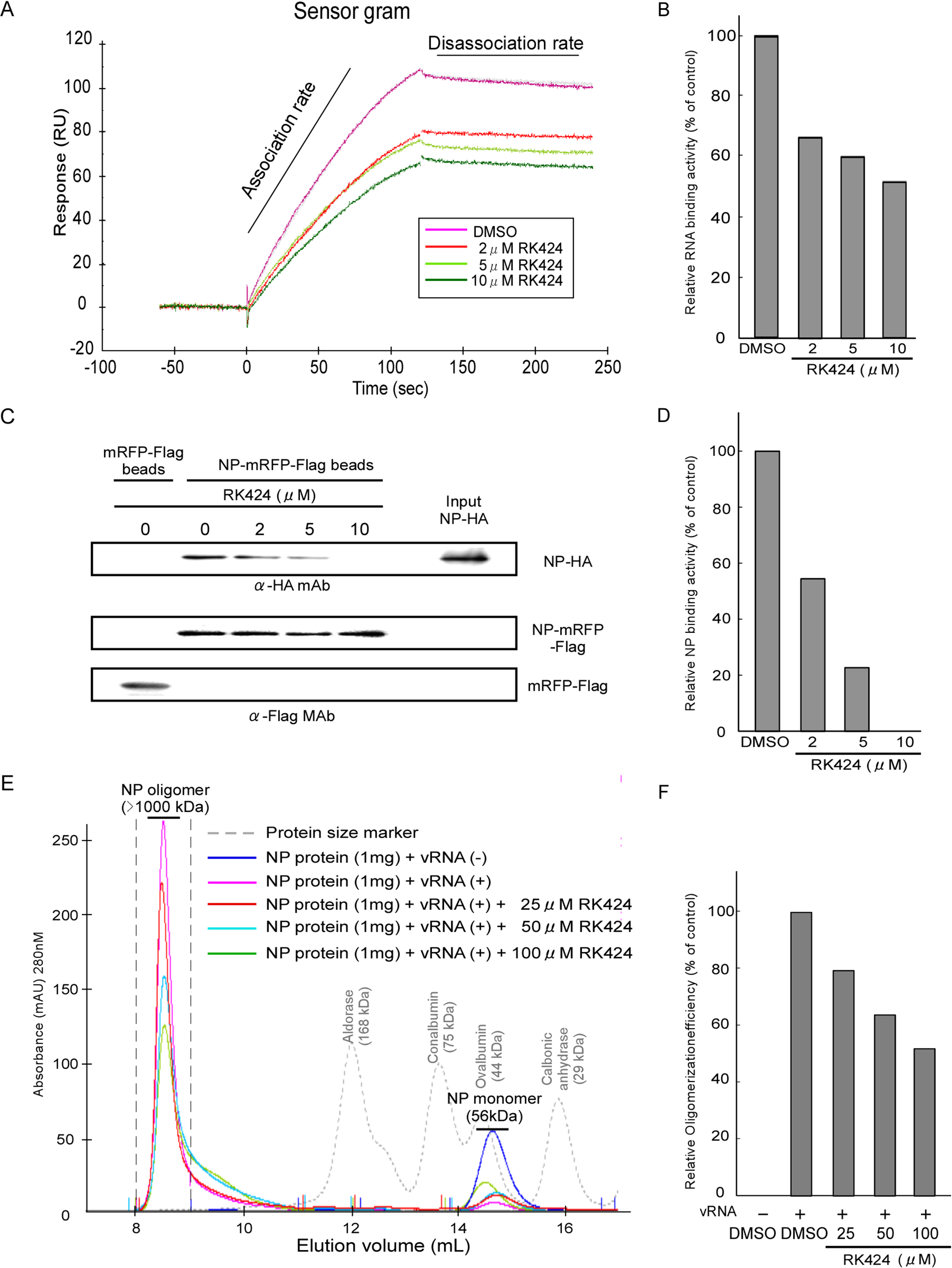 Effect of RK424 on the NP-RNA and NP-NP interactions, and on NP oligomerization.