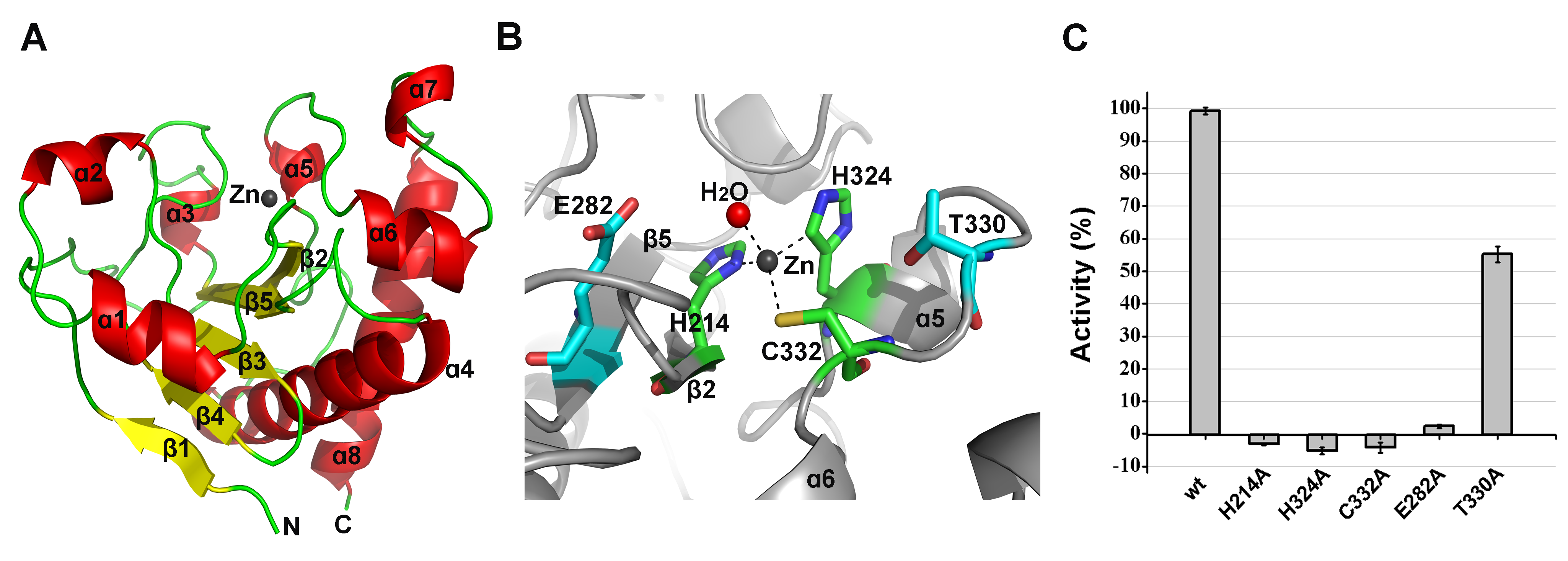 Structural and functional analysis of the LysGH15 amidase-2 domain.