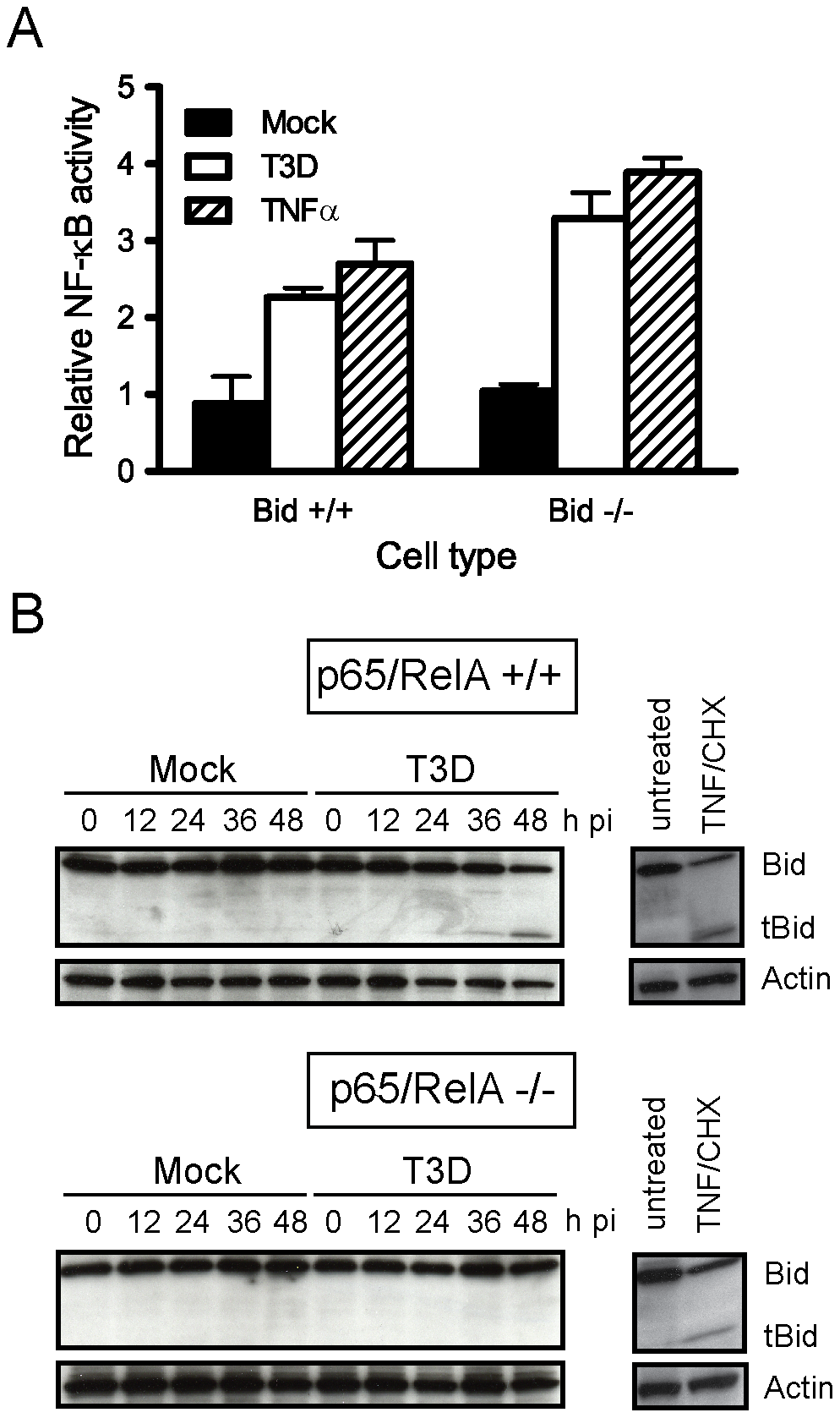 NF-κB is required for Bid cleavage following reovirus infection.