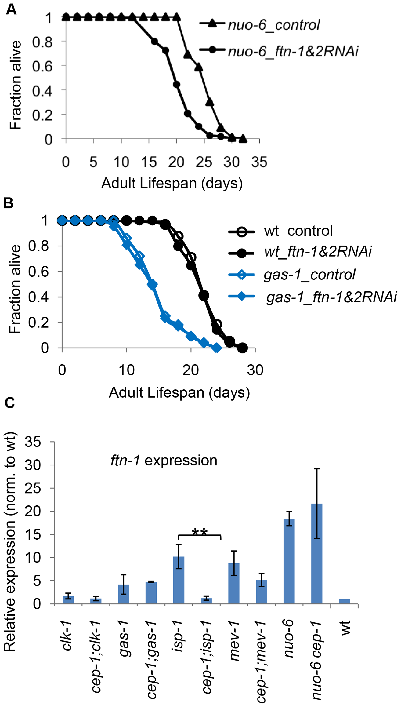 <i>ftn-1</i> is differentially expressed in various ETC mutants and mediates their lifespan outcomes.