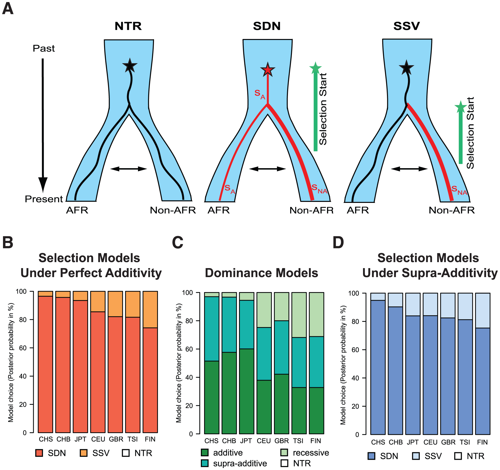(A) Graphical representation of the different models of selection tested in the ABC analysis (NTR - neutral, SDN - selection on a de novo mutation, and SSV - selection on standing variation).