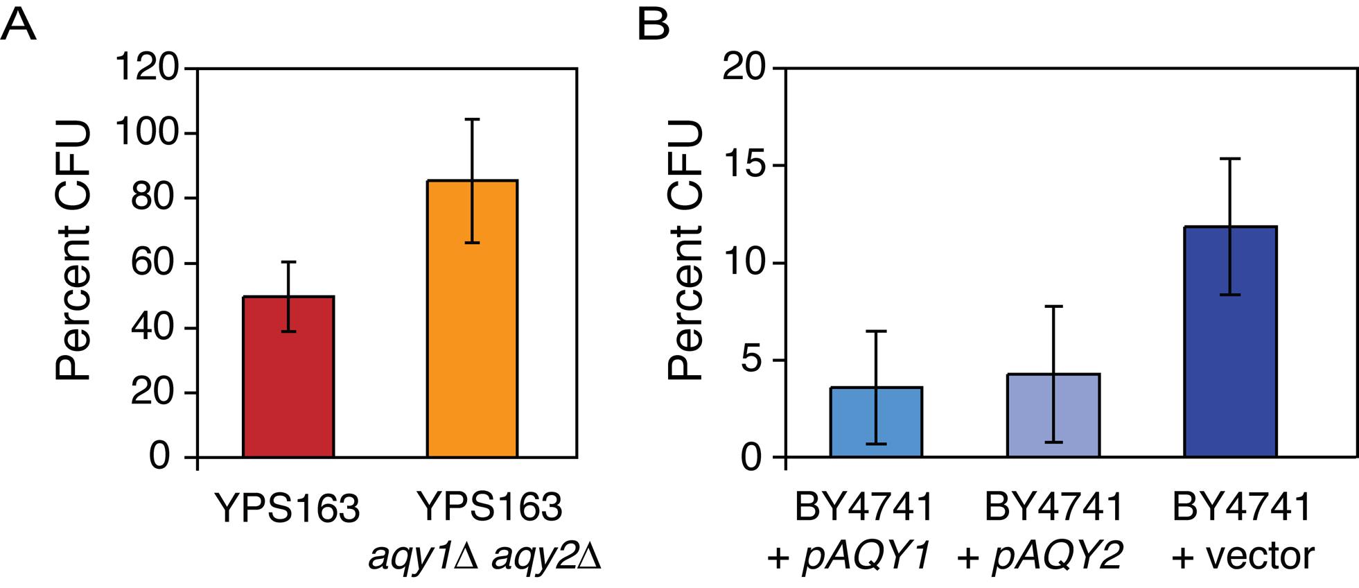 Strains lacking AQY genes show a fitness advantage under high osmolarity.