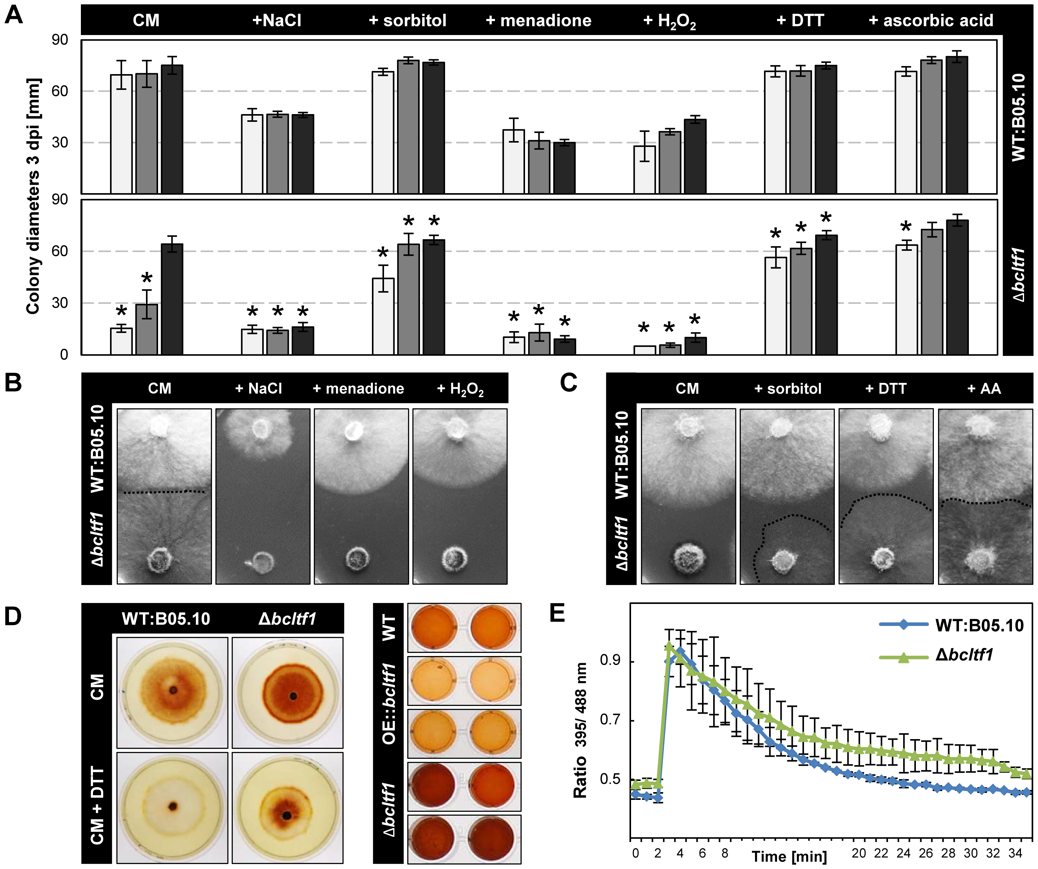 BcLTF1 is needed to cope with oxidative stress and regulates the generation of ROS.