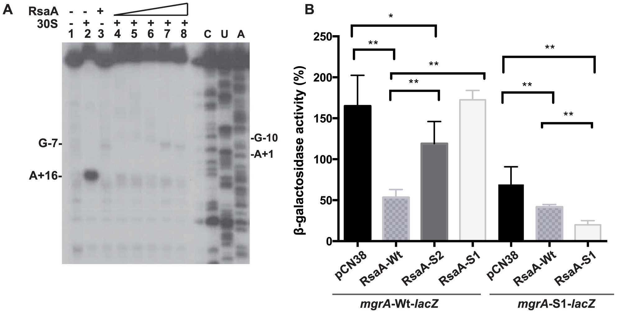 RsaA-dependent repression of <i>mgr</i>A mRNA translation.