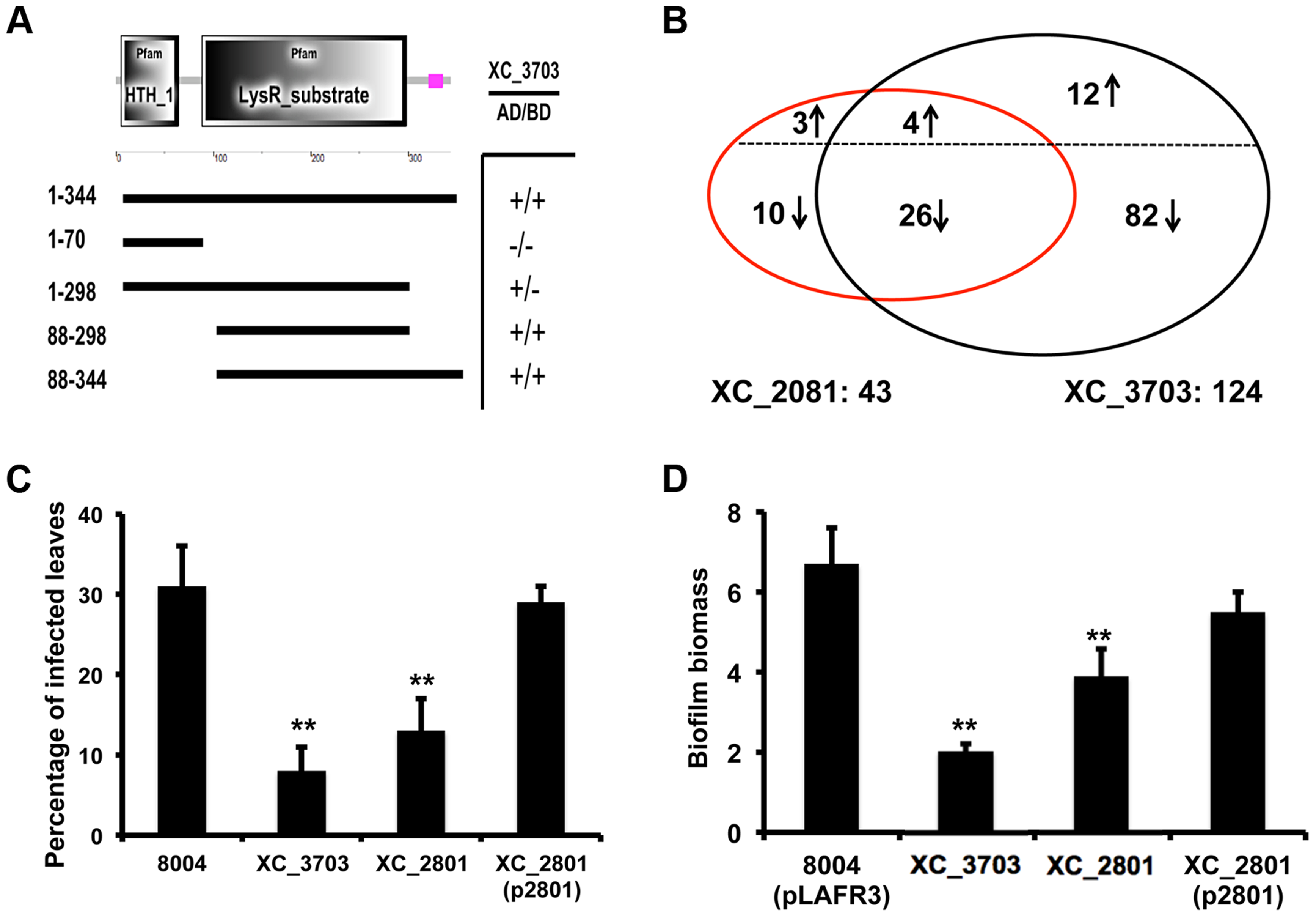 Protein interaction, transcription and phenotypic profiling reveal an overlap in regulatory influence of XC_3703 and XC_2801.