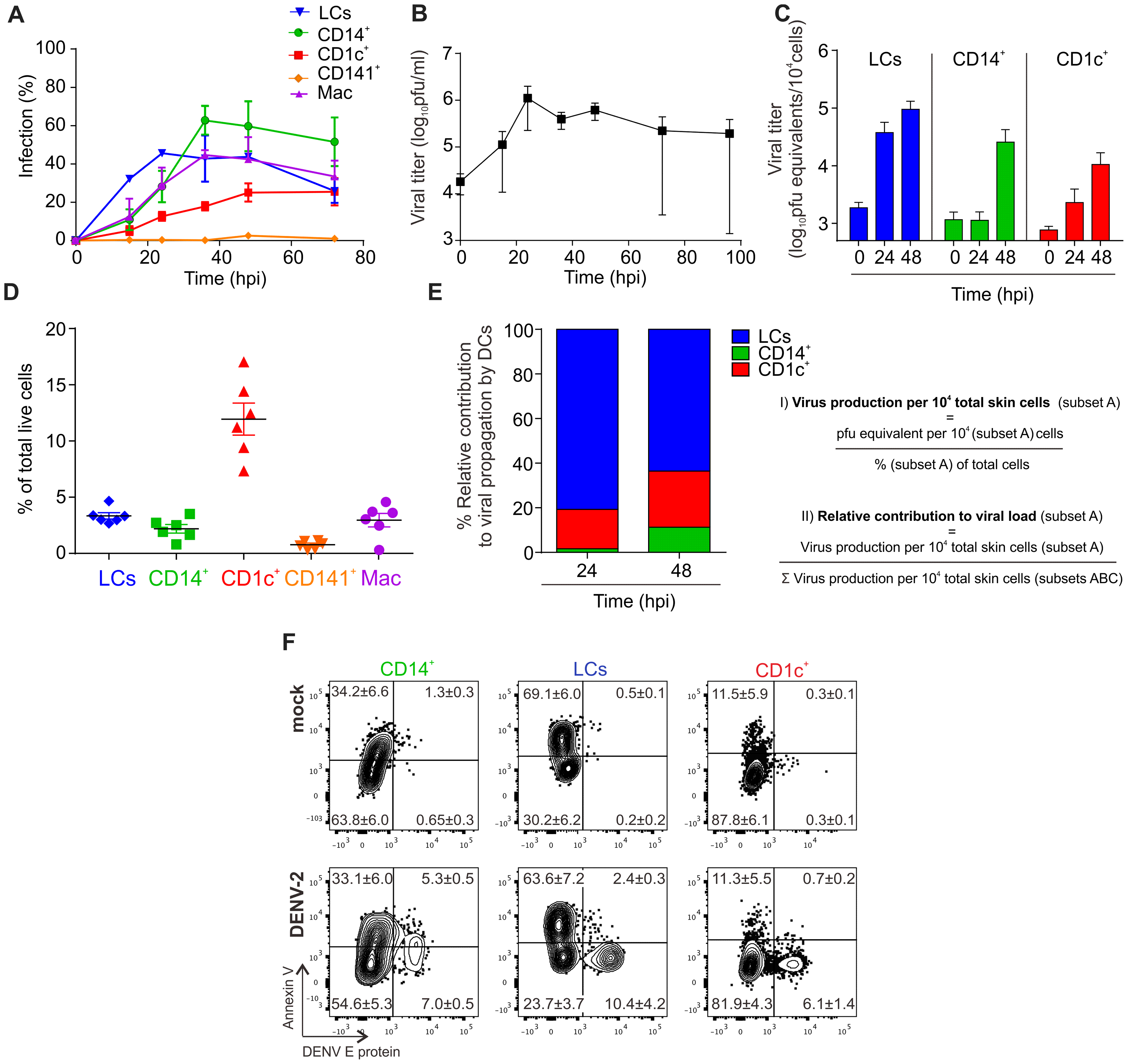 Infection characteristics of DENV in DC subsets from human skin.