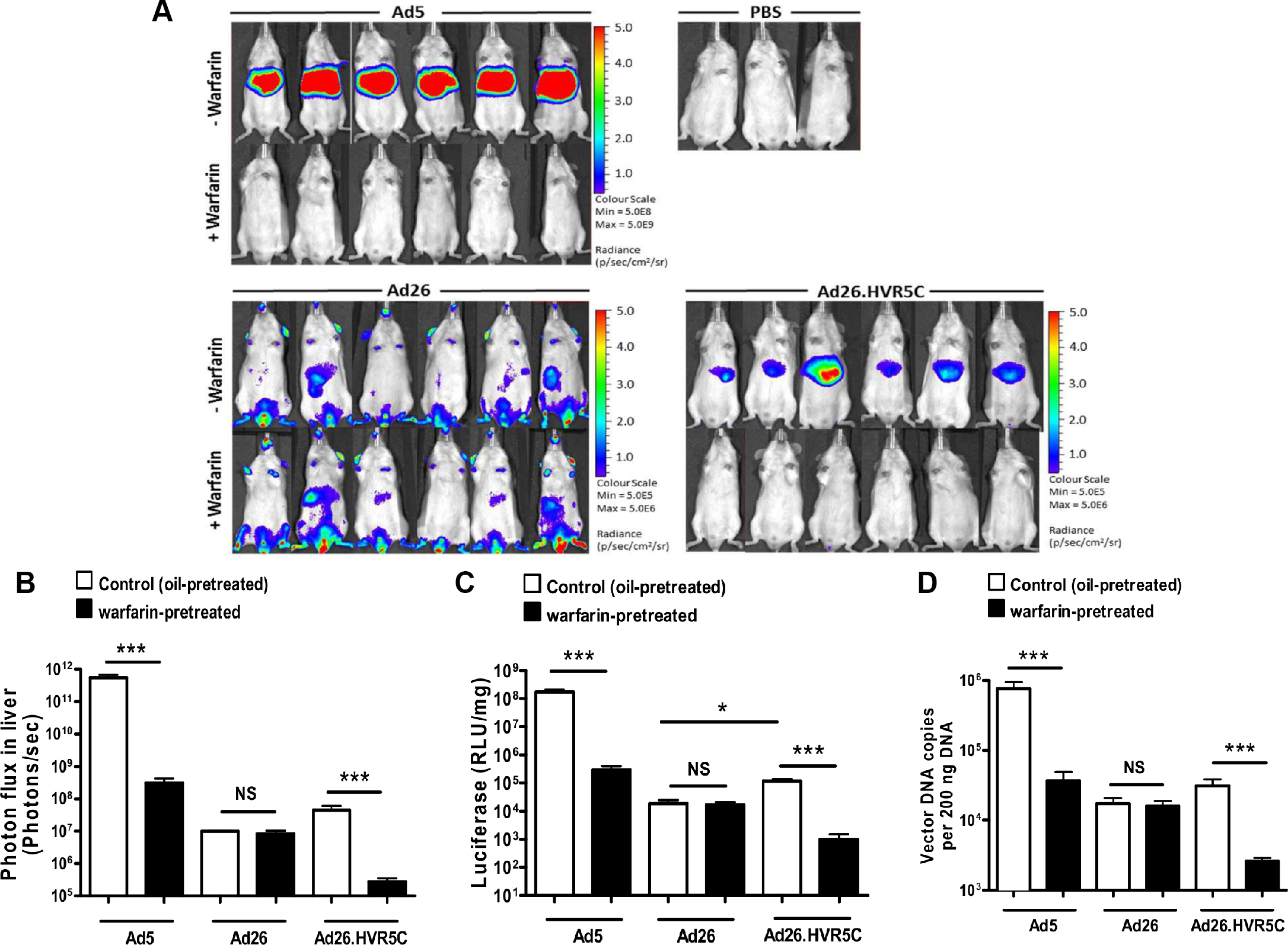 <i>In vivo</i> analysis of Ad26.HVR5C mediated liver transduction in MF1 mice.