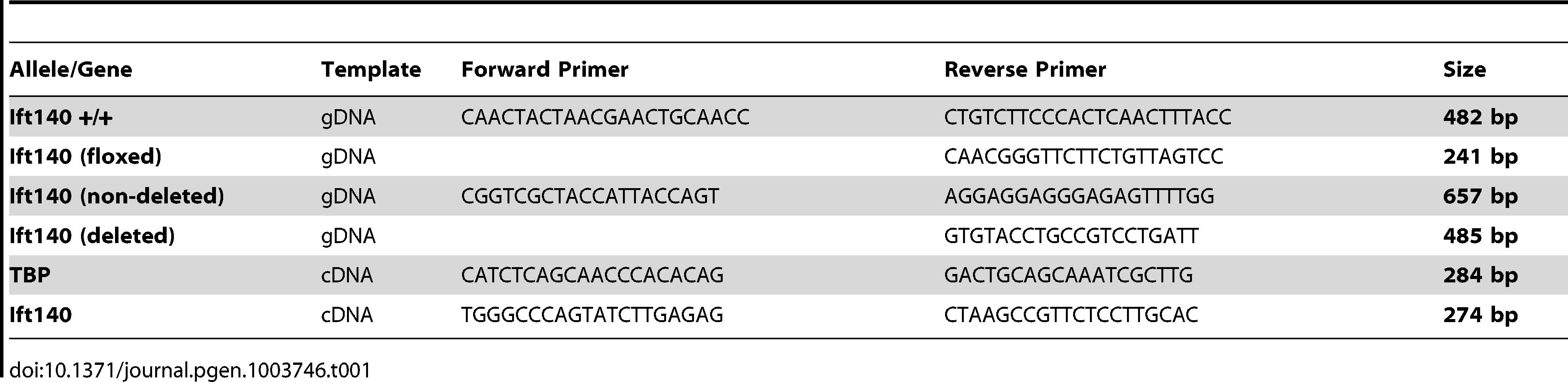 Oligonucleotide primers used in PCR.