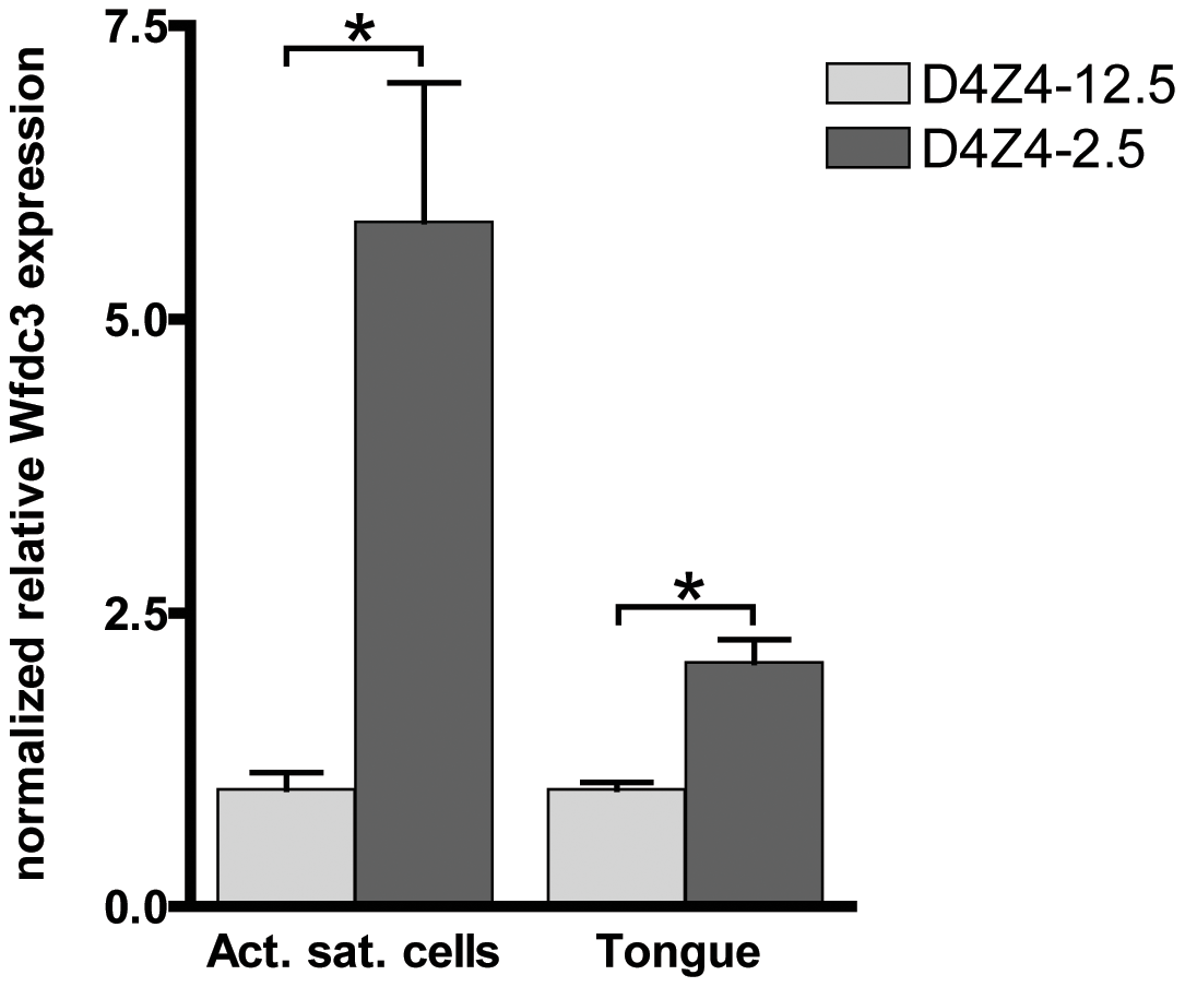 Expression of the DUX4 induced <i>Wfdc3</i> gene in myoblasts and tongue muscle of D4Z4-2.5 mice.