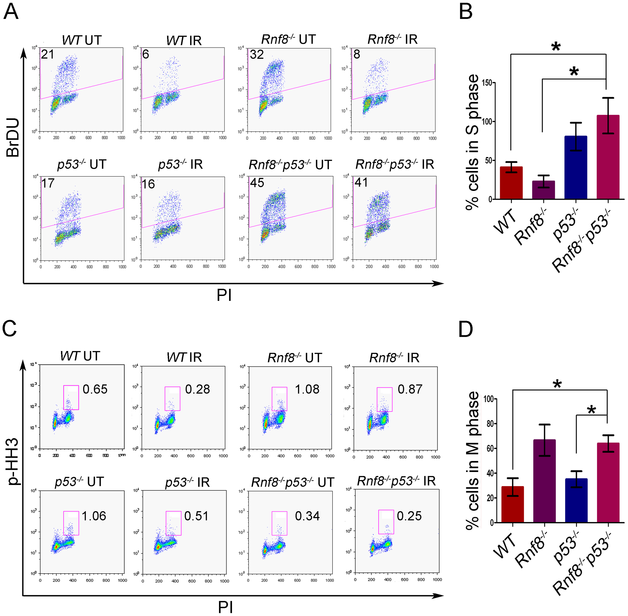Loss of Rnf8 and p53 results in defective cell cycle checkpoints.