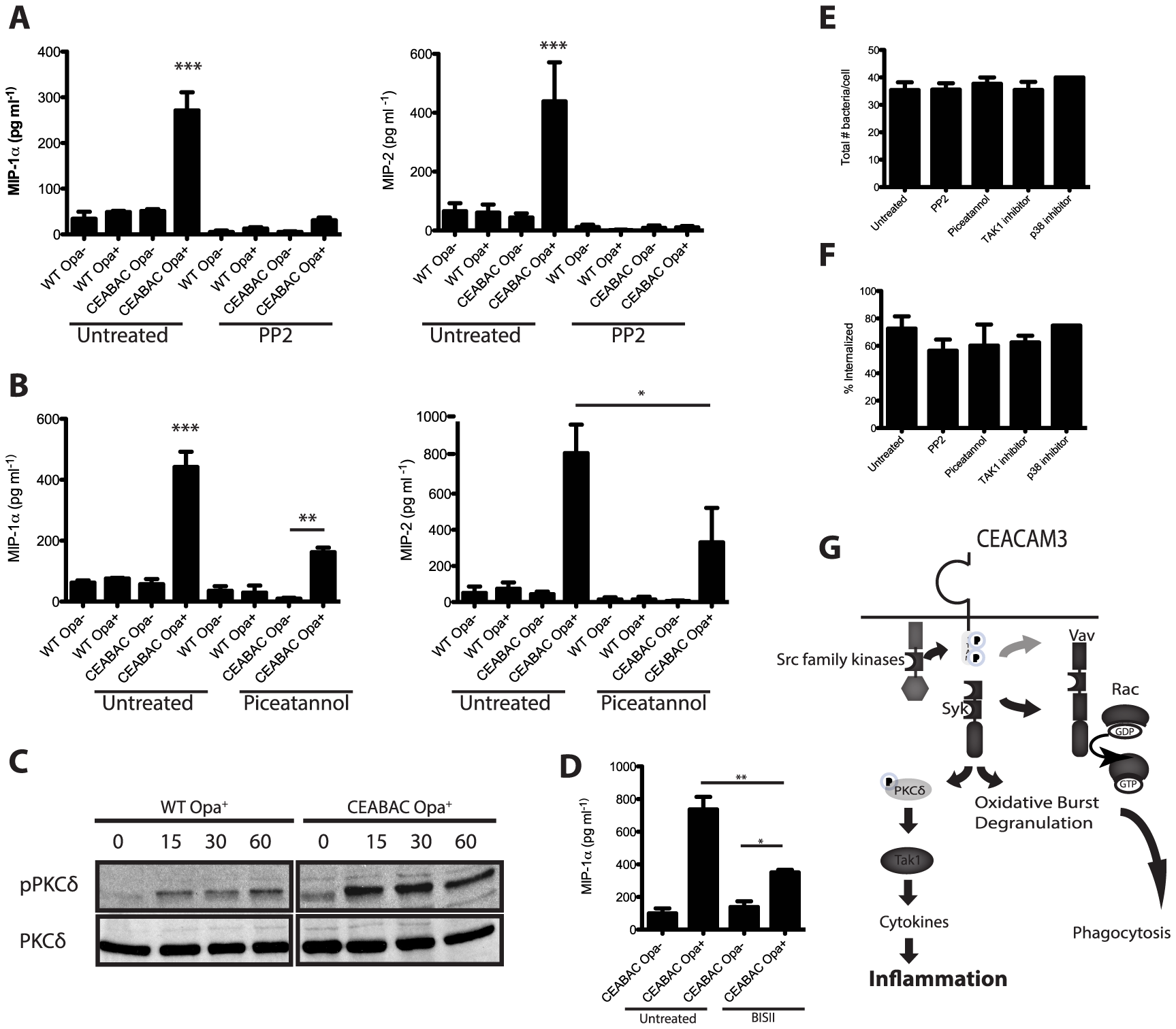 CEACAM3 signaling is required for the PMN cytokine response to <i>N. gonorrhoeae</i>.