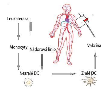 Obecné schéma imunoterapie dendritickými buňkami je znázorněno na obrázku