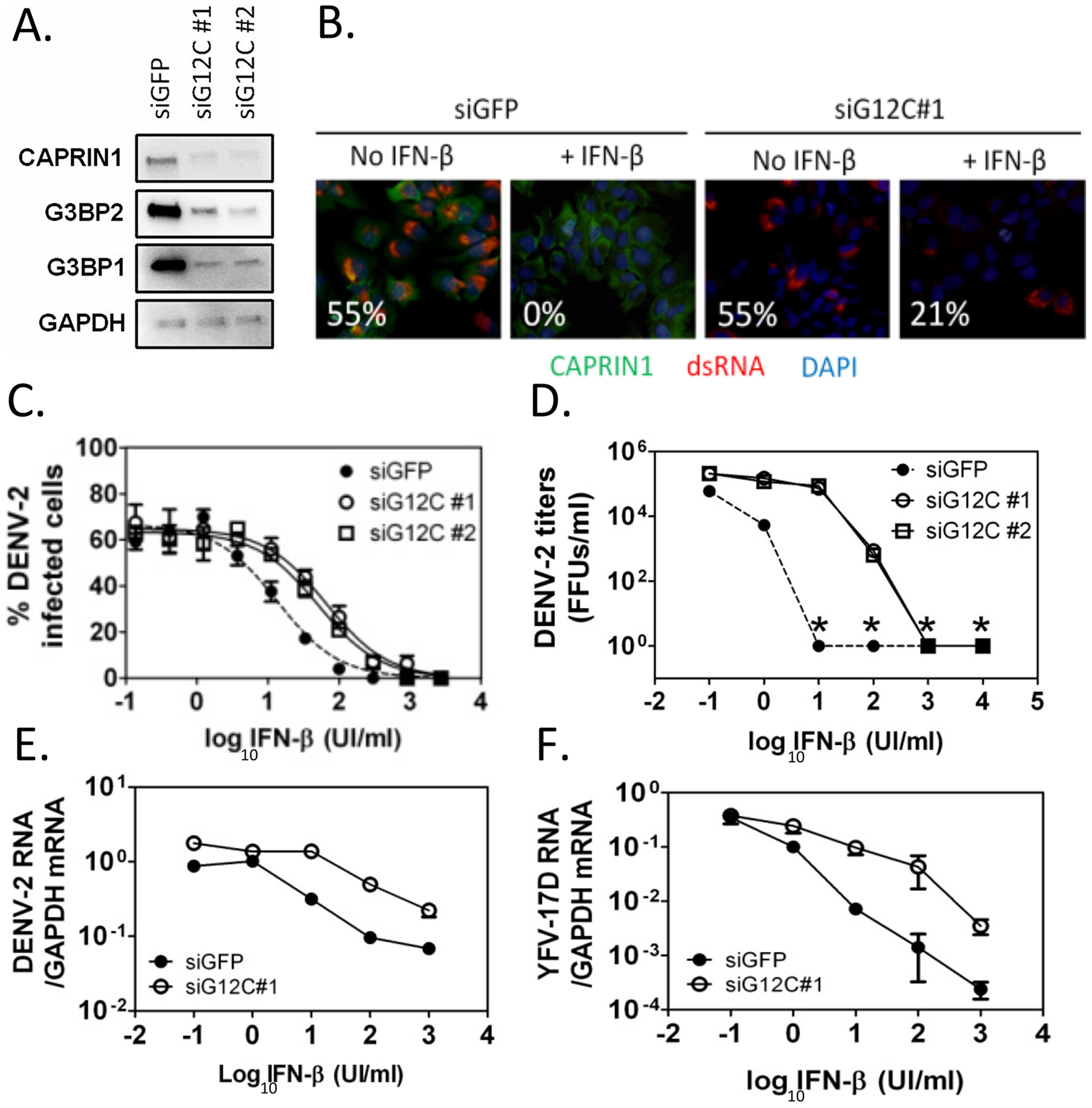 G3BP1, G3BP2 and CAPRIN1 are required for IFN-β mediated antiviral activity against DENV-2.