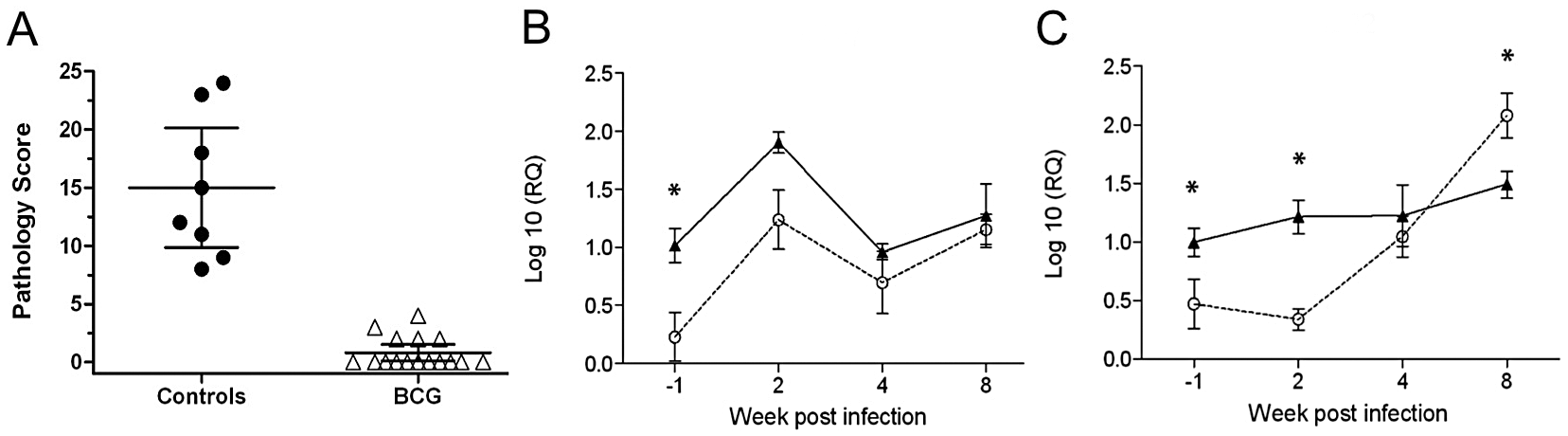 Gene expression in PPDB-stimulated PBMC from BCG vaccinated and control cattle.