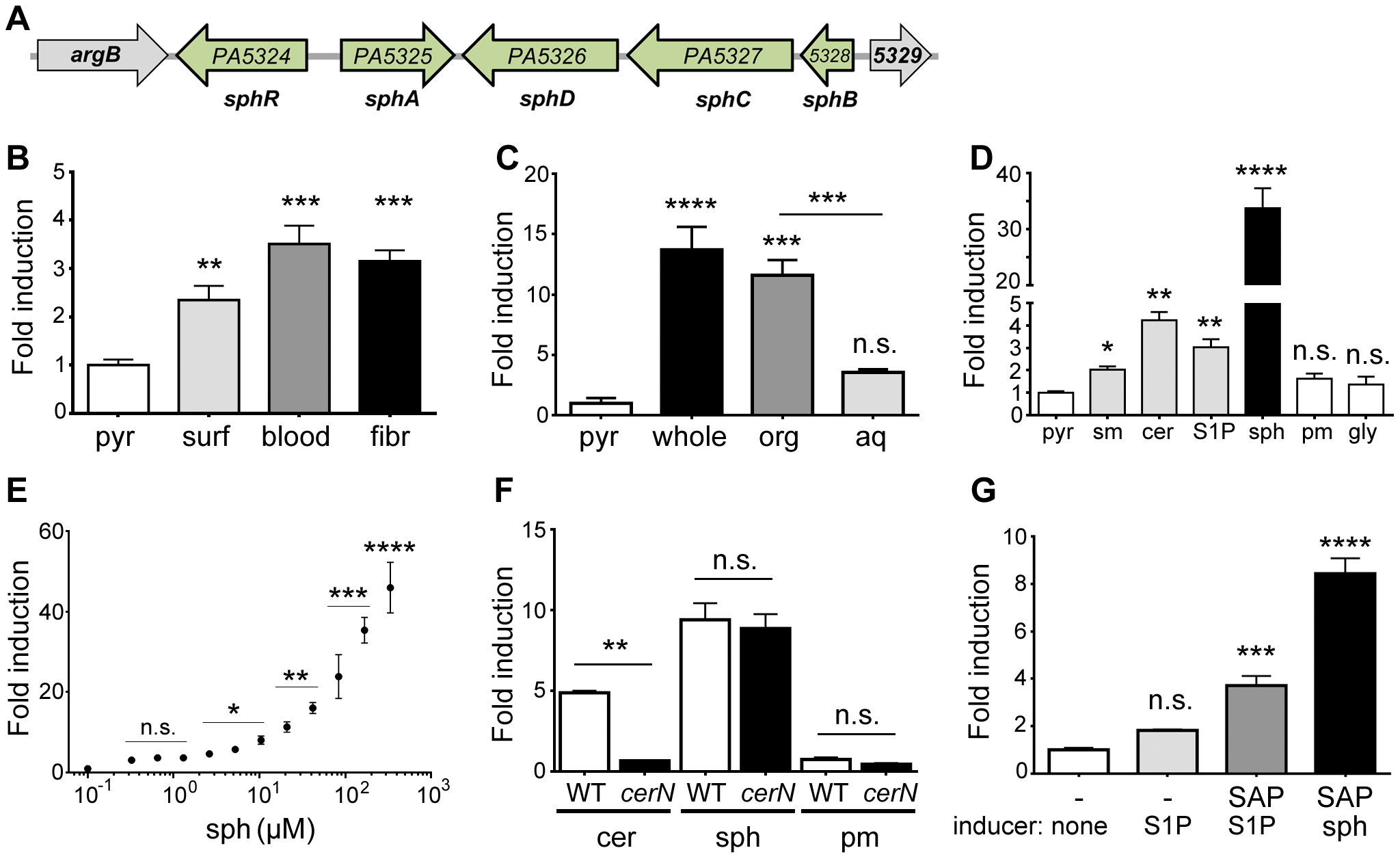 Expression of <i>sphA</i> (<i>PA5325</i>) is induced by sphingosine.