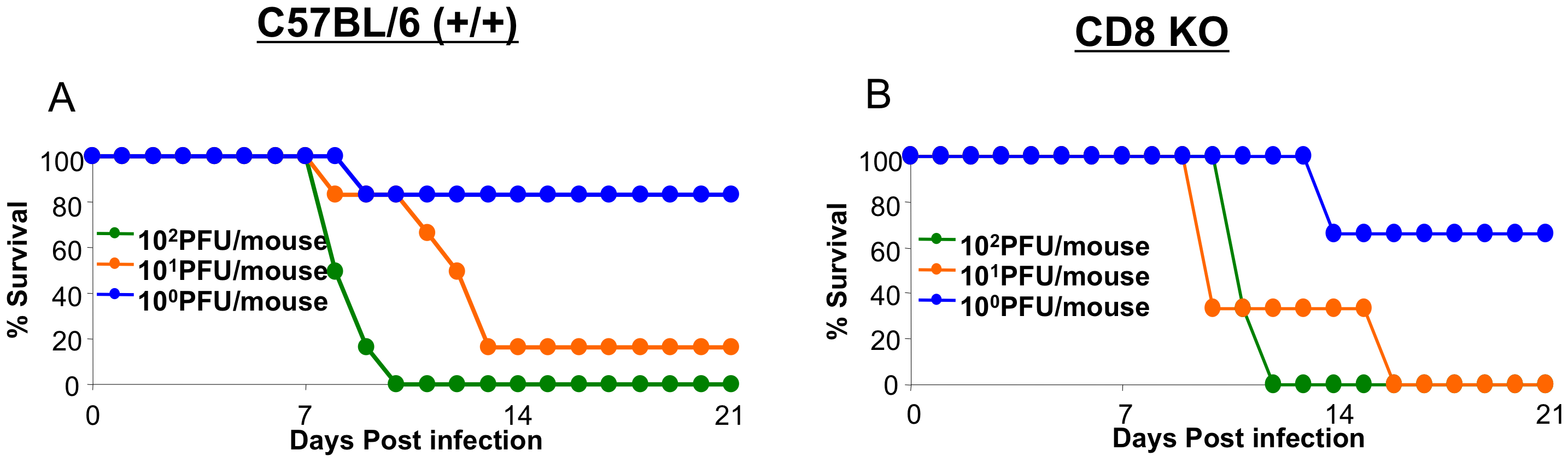Effect of CD8 T cell deficiency on survival of mice infected with H5N1 viruses.