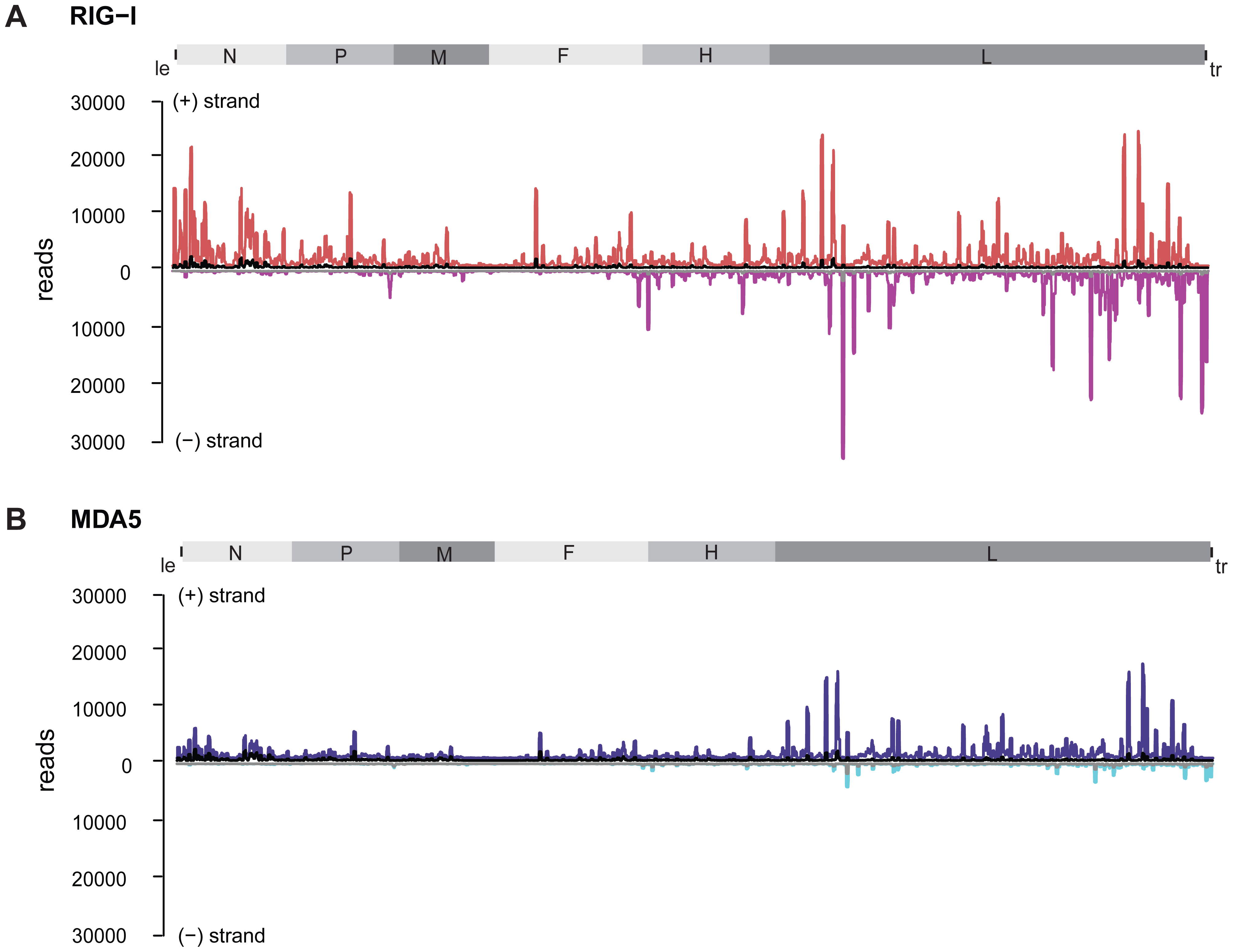Strand separation of sequencing libraries into (+) and (−) MeV RNA.
