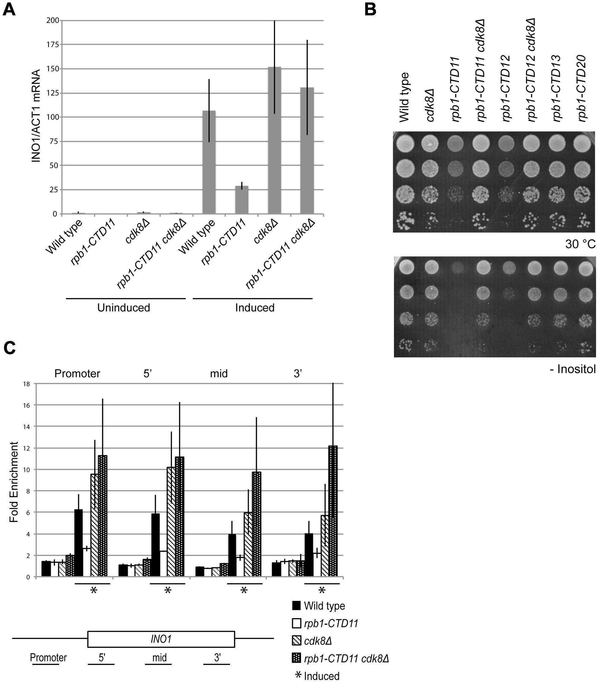<i>INO1</i> expression and RNAPII association defects of <i>rpb1-CTD11</i> mutants were suppressed by deleting <i>CDK8</i>.