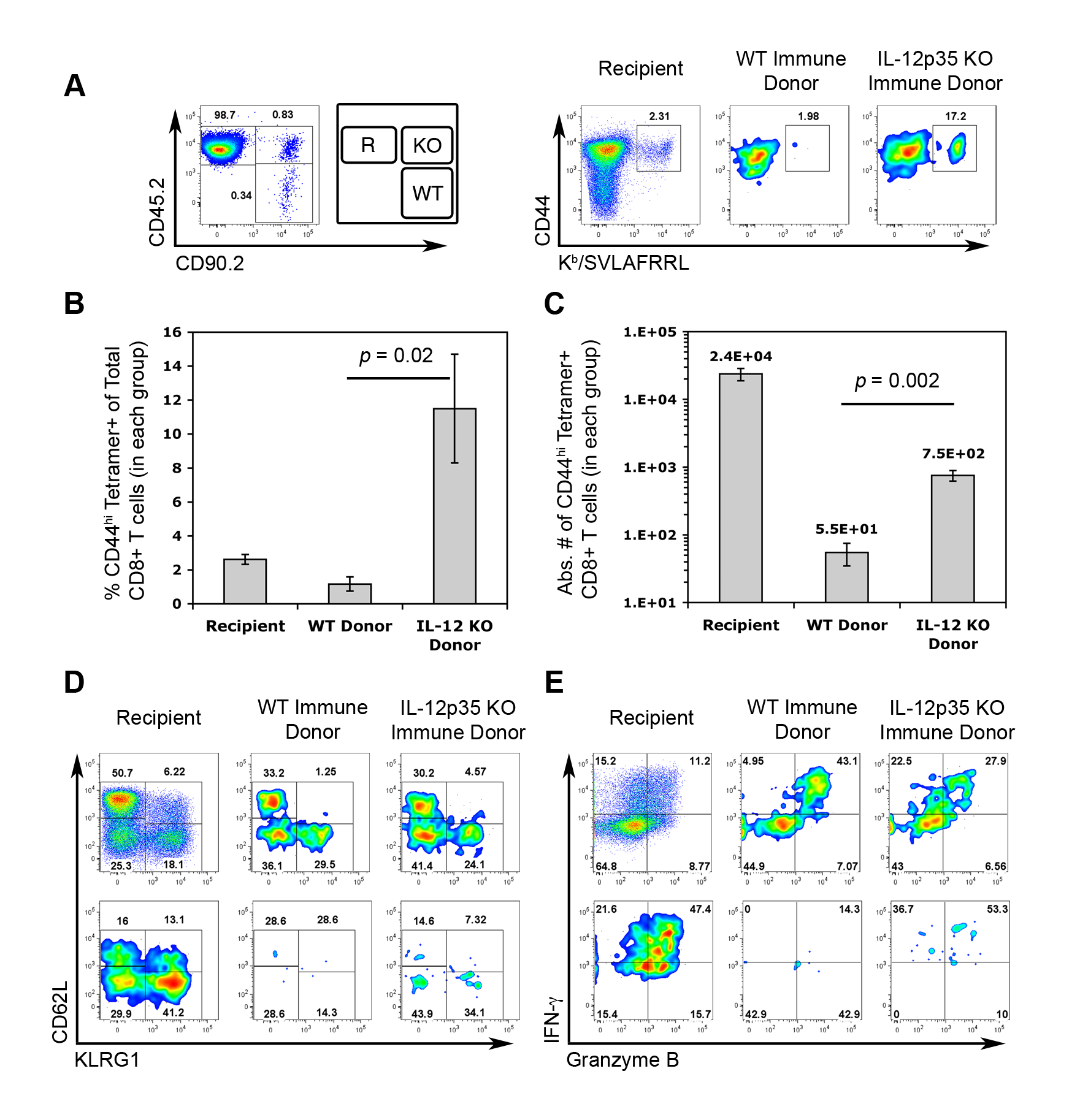 Central memory CTLs from <i>Il12a</i><sup>−/−</sup> mice are functionally competent.