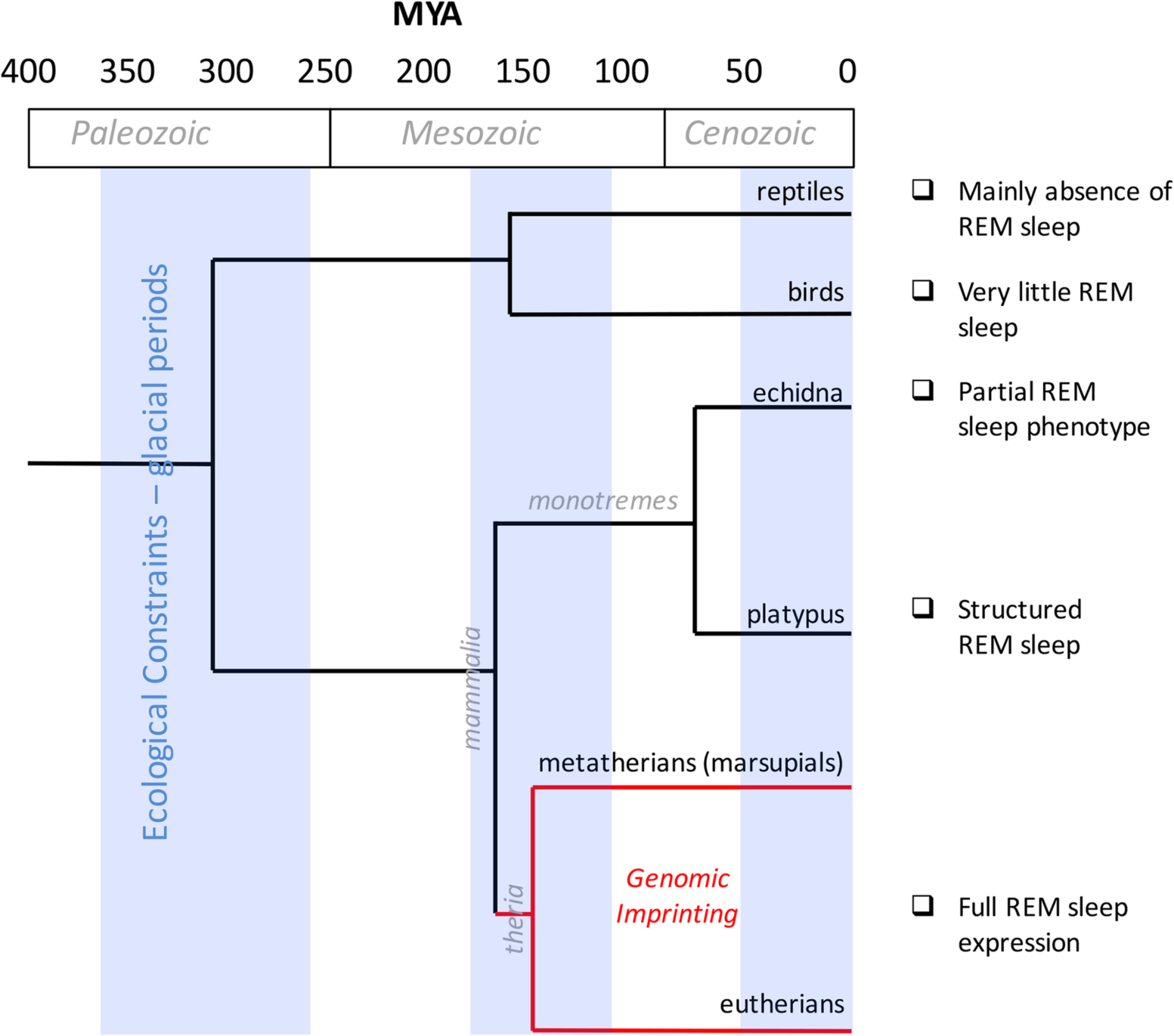 Evolution of REM sleep and genomic imprinting.