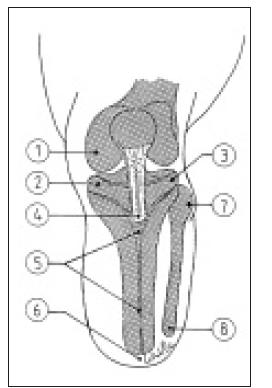 Výstupky kostí, které jsou zatížitelné.