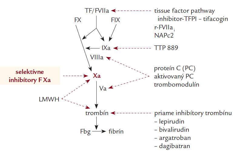 Nové antikoagulanciá a miesto ich inhibičného účinku. Podľa [6,7].