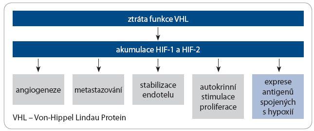 Následky ztráty funkce VHL u renálního karcinomu