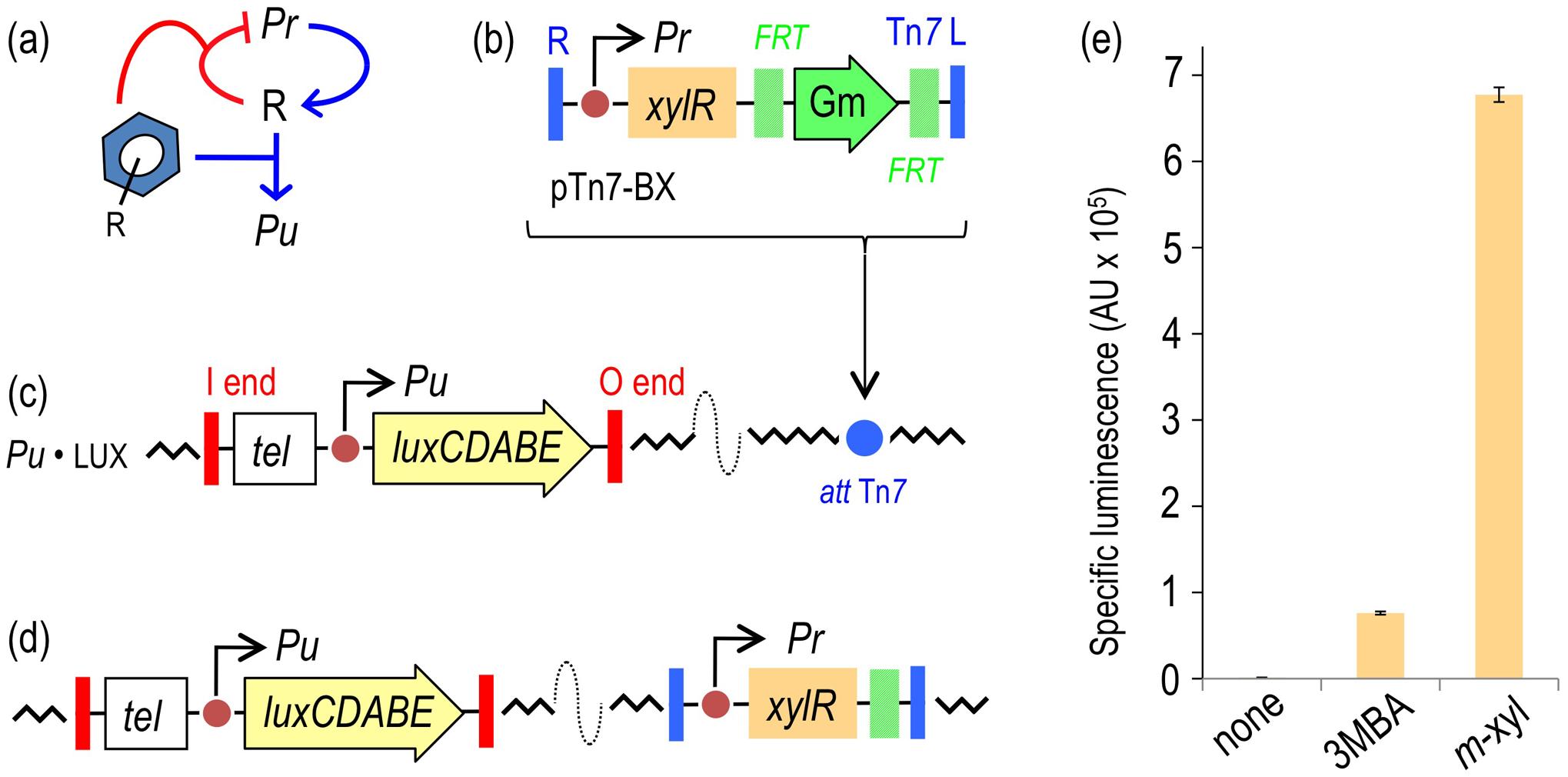 Performance of the XylR/<i>Pu</i> regulatory node in response to optimal (<i>m</i>-xylene) and suboptimal (3-methylbenzyl alcohol, 3MBA) inducers.