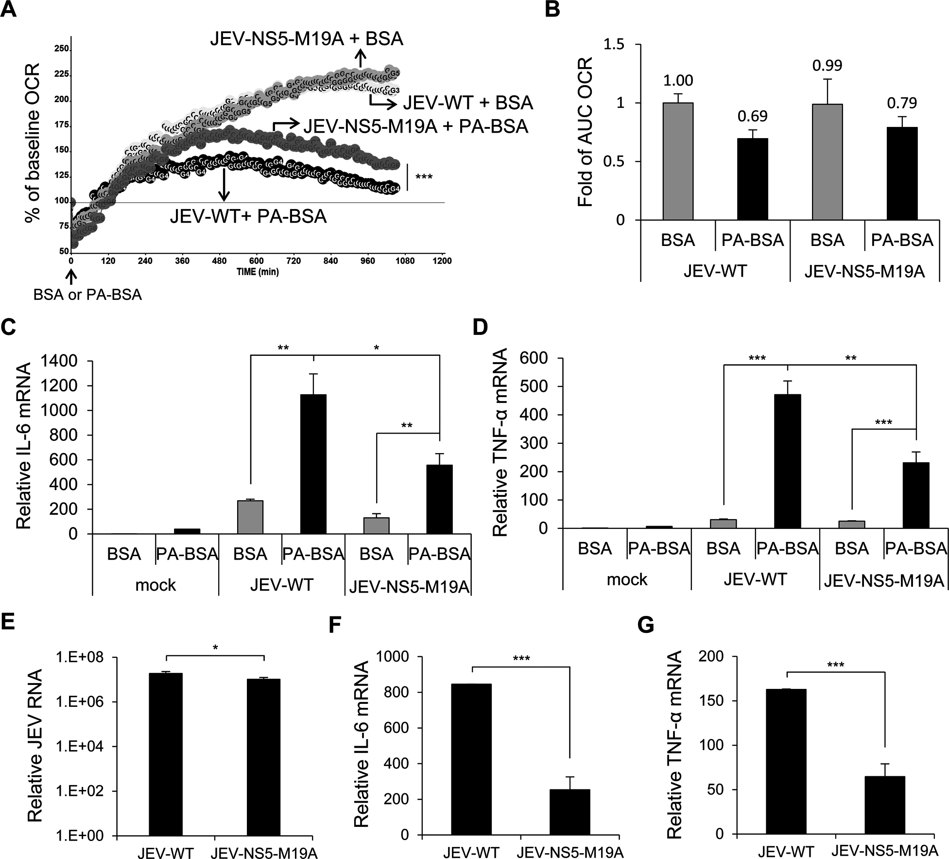 The recombinant JEV with NS5-M19A mutation is less able to block LCFA β-oxidation and induces less cytokine expression.