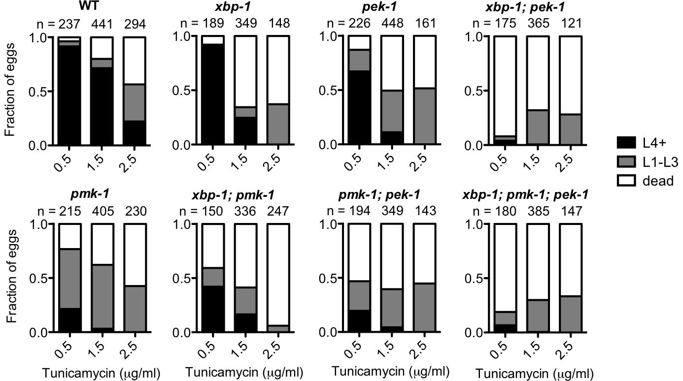 PMK-1 protects against exogenously induced ER stress.