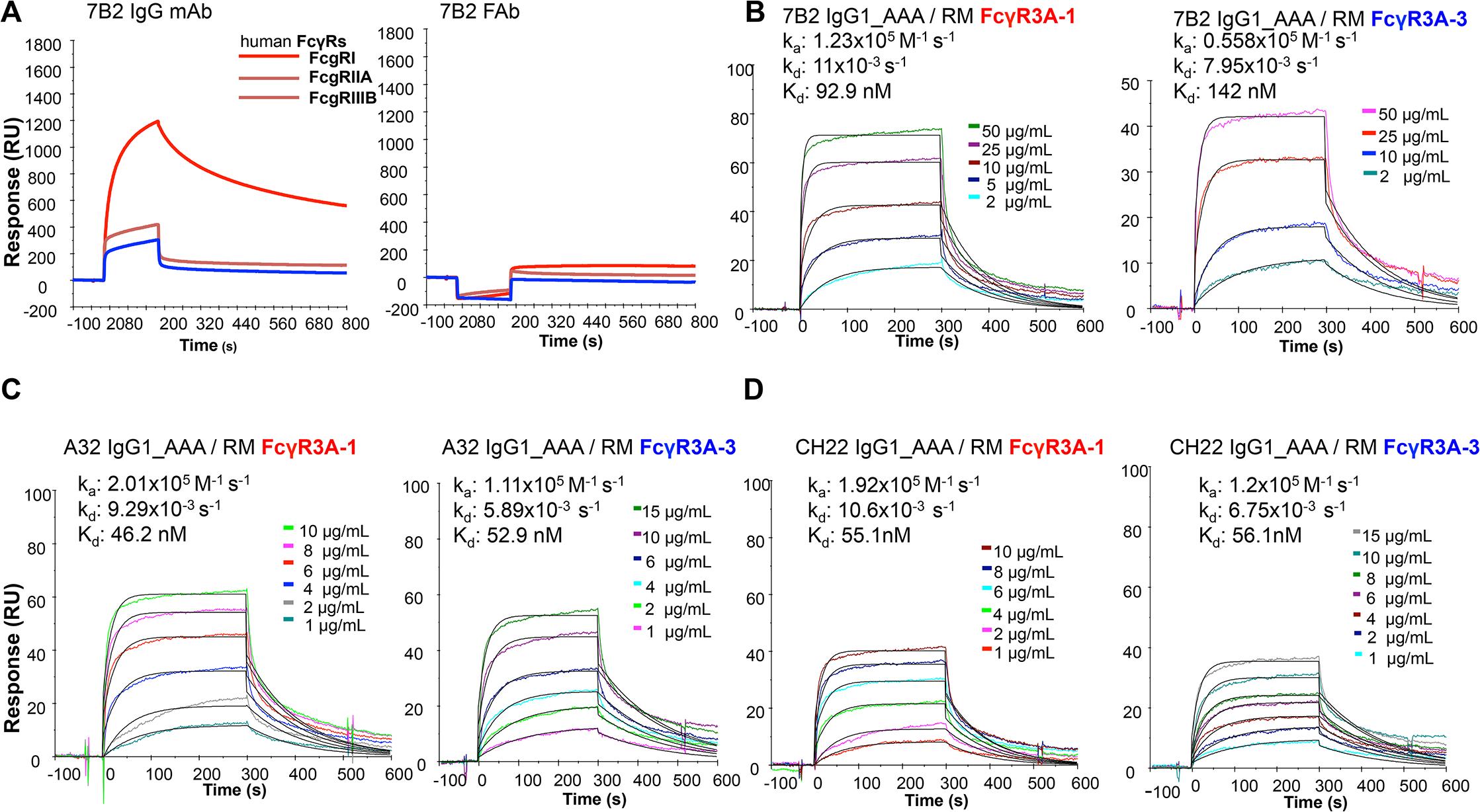 Surface plasmon resonance of mAbs to human and rhesus FcR.