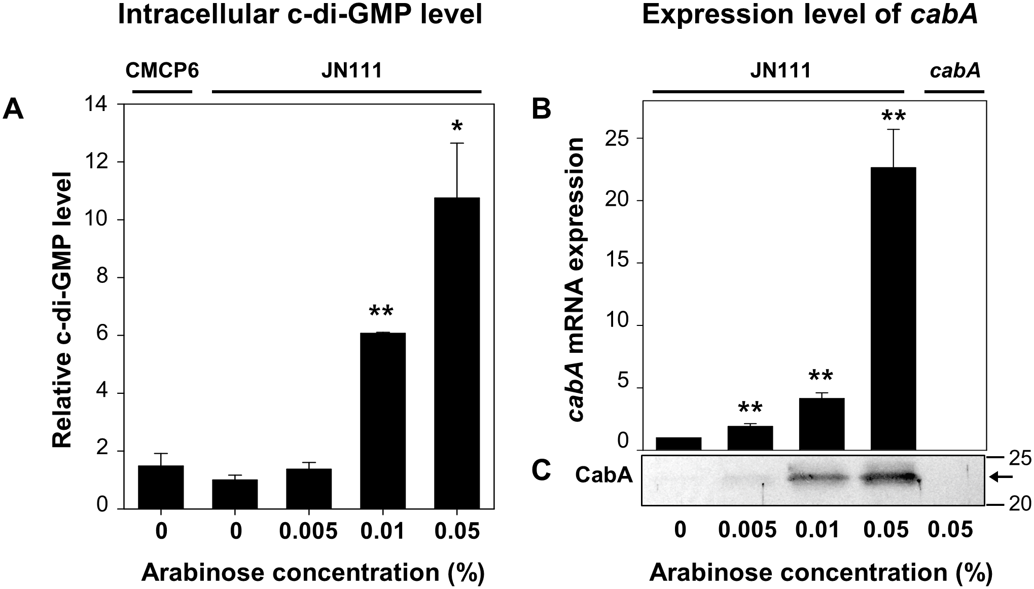 Intracellular levels of c-di-GMP and <i>cabA</i> expression.