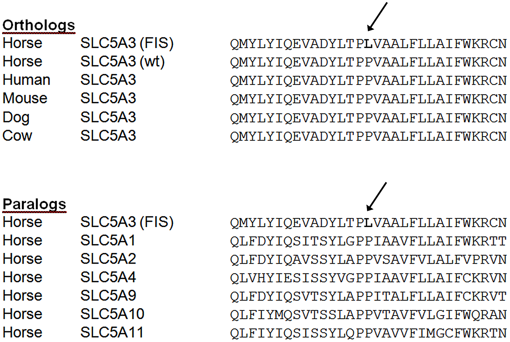 SLC5A3 amino acid sequences alignments in the region of the FIS mutation.