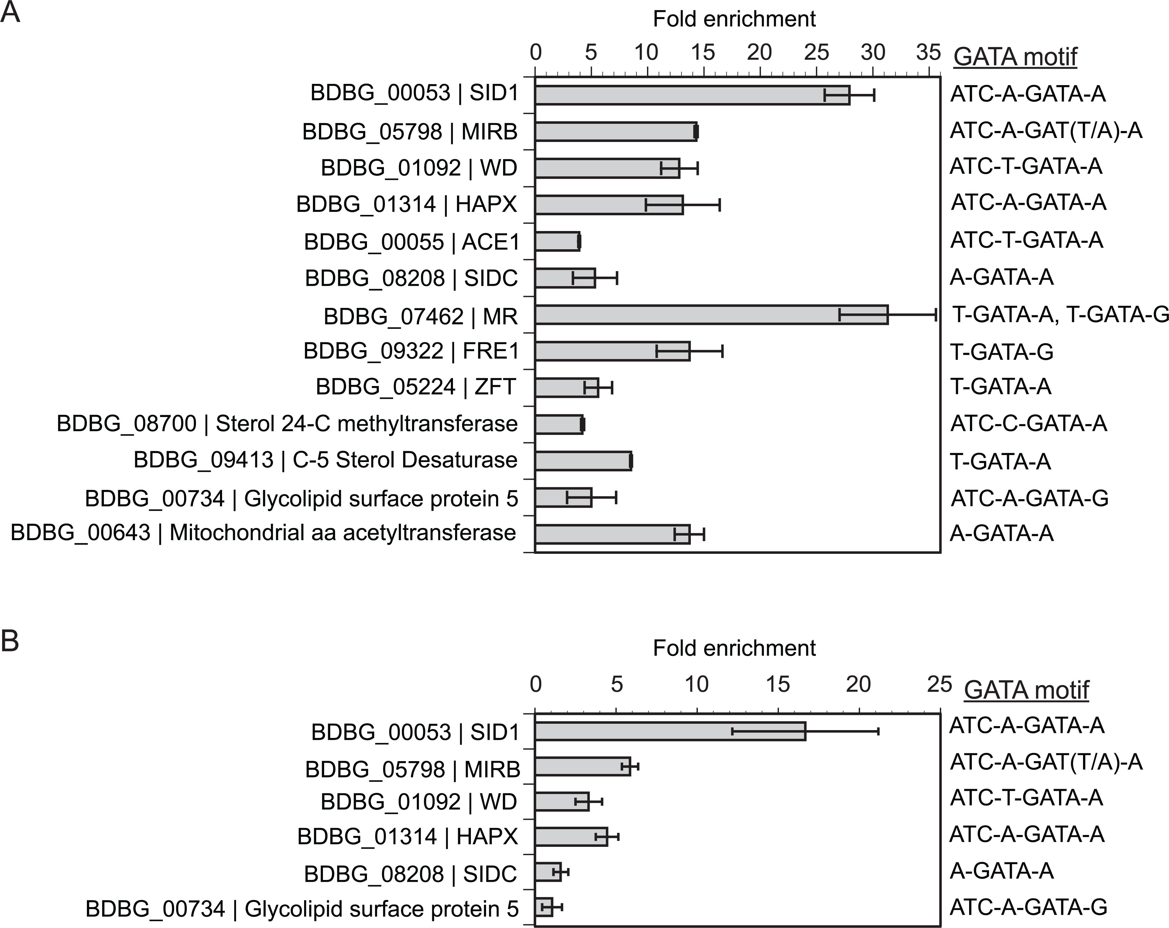 Chromatin immunoprecipitation with quantitative real-time PCR (ChIP-qPCR).