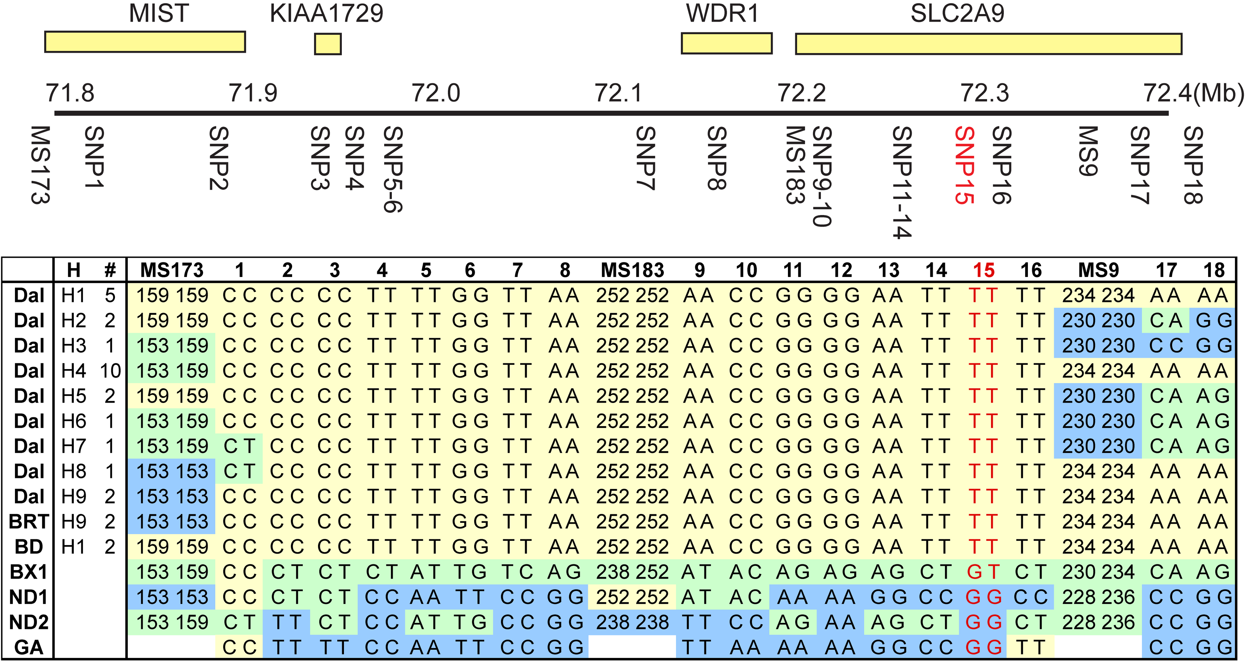 Homozygosity mapping of the huu locus.