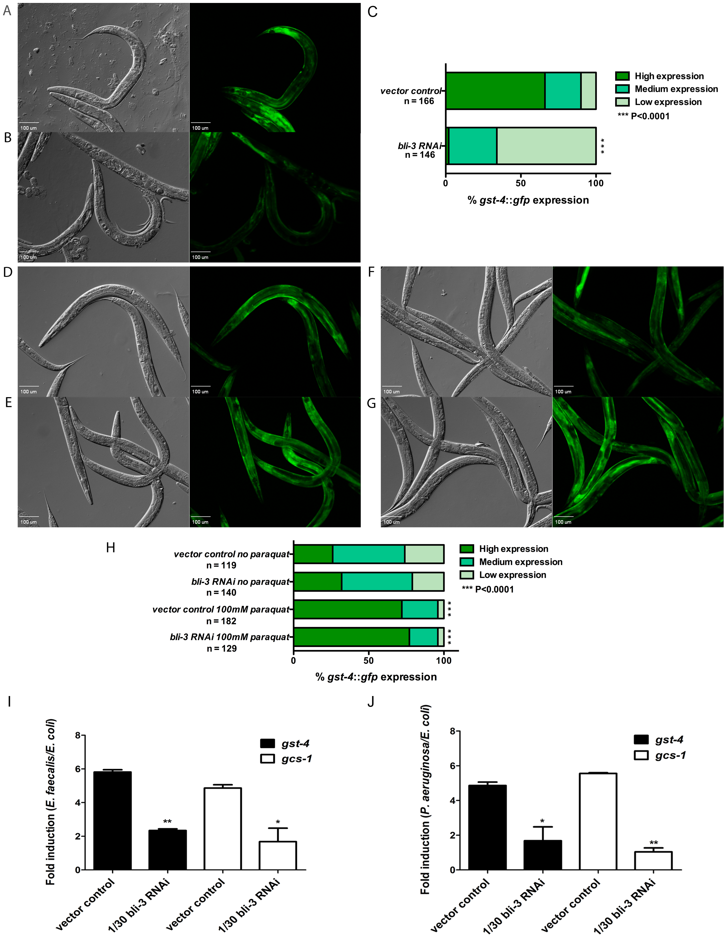 SKN-1 dependent genes are induced in response to ROS produced by Ce-Duox1/BLI-3 during infection.