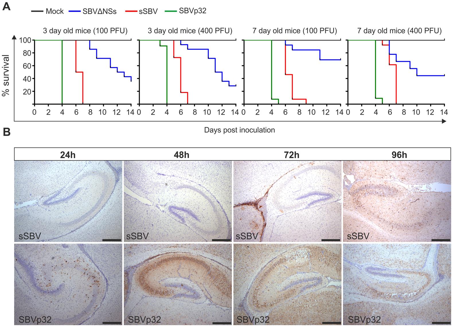 Virulence of SBV mutants in suckling NIH-Swiss mice.