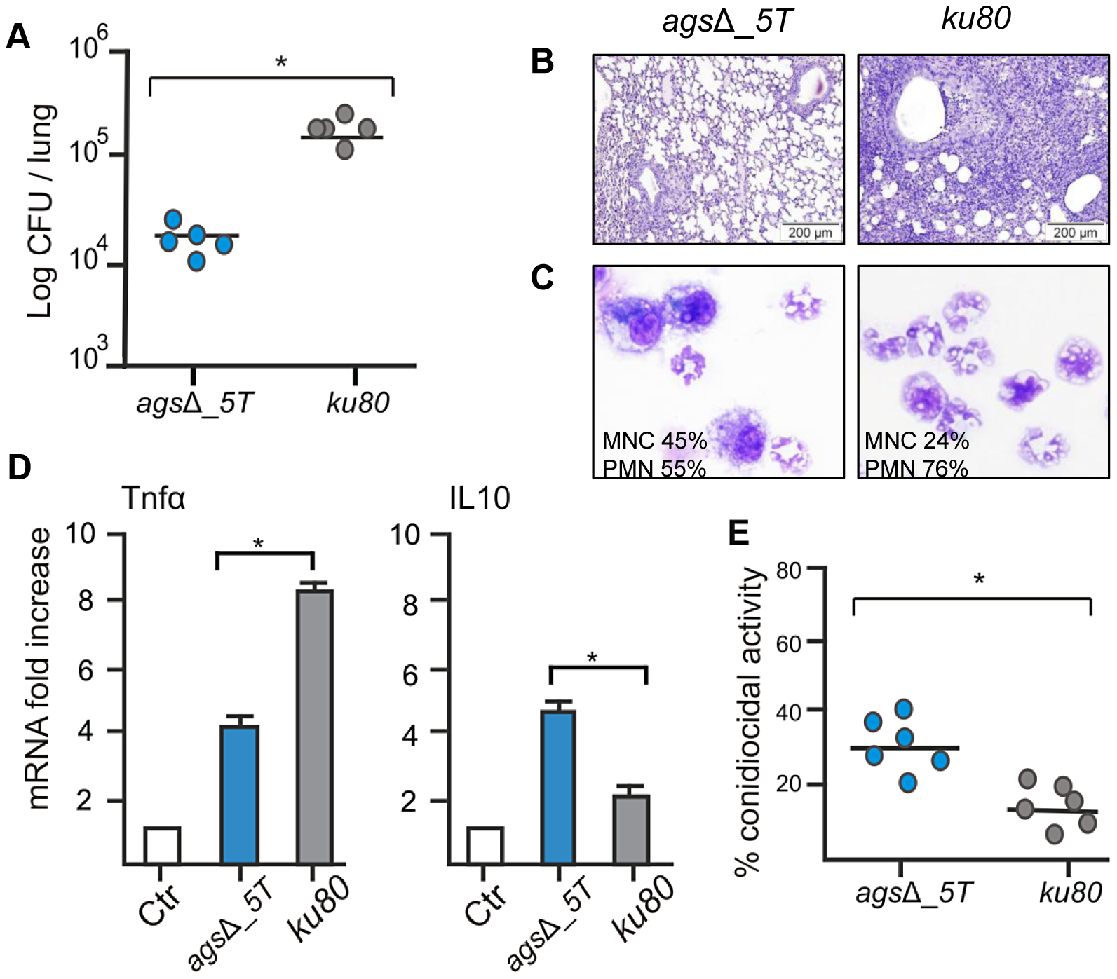 Immunocompetent mice infected with resting conidia of <i>ags</i>Δ_<i>5T</i> and parental (<i>ku80</i>) strains.