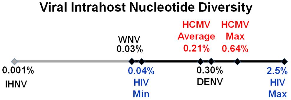 HCMV intrahost diversity is similar to RNA viruses.