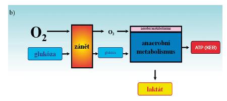 Obr. 2b Schéma energetických poměrů v extravaskulárním prostoru při zánětlivém procesu