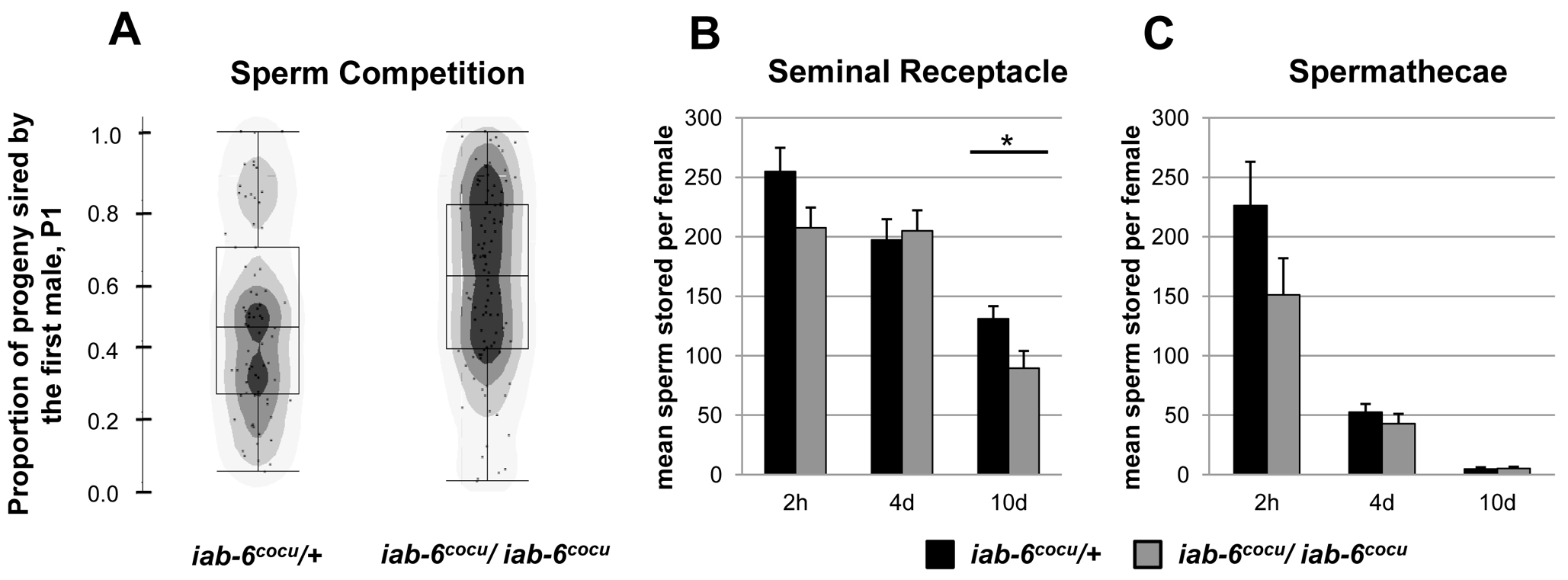 Sperm storage and use by mates of <i>iab-6<sup>cocu</sup></i> or control males.