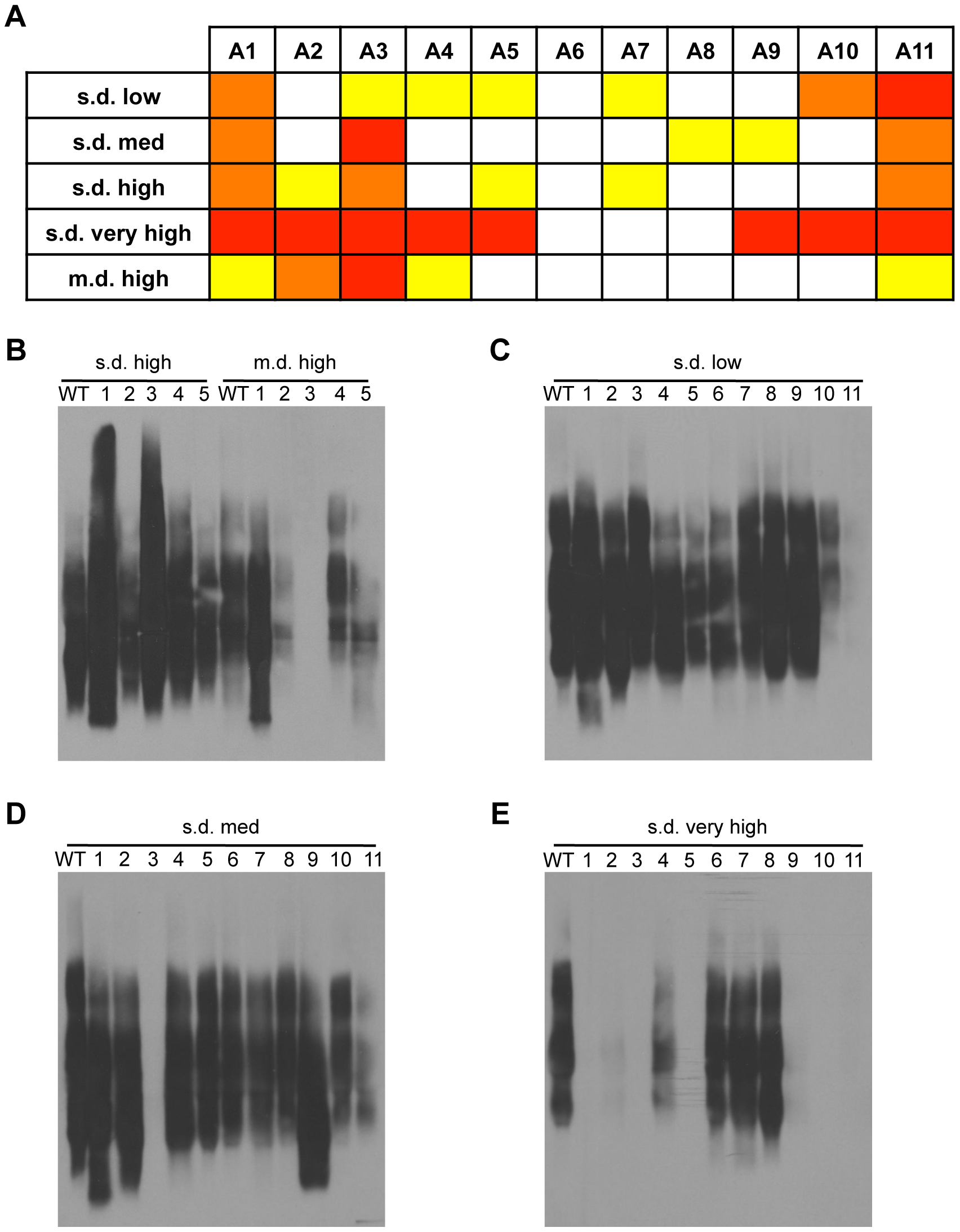 Distinct regions of Rnq1 are important for each [<i>RNQ</i>+] variant.