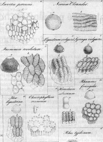 """Ilustrace ze spisku """"De cellulis"""" (detail)"""
