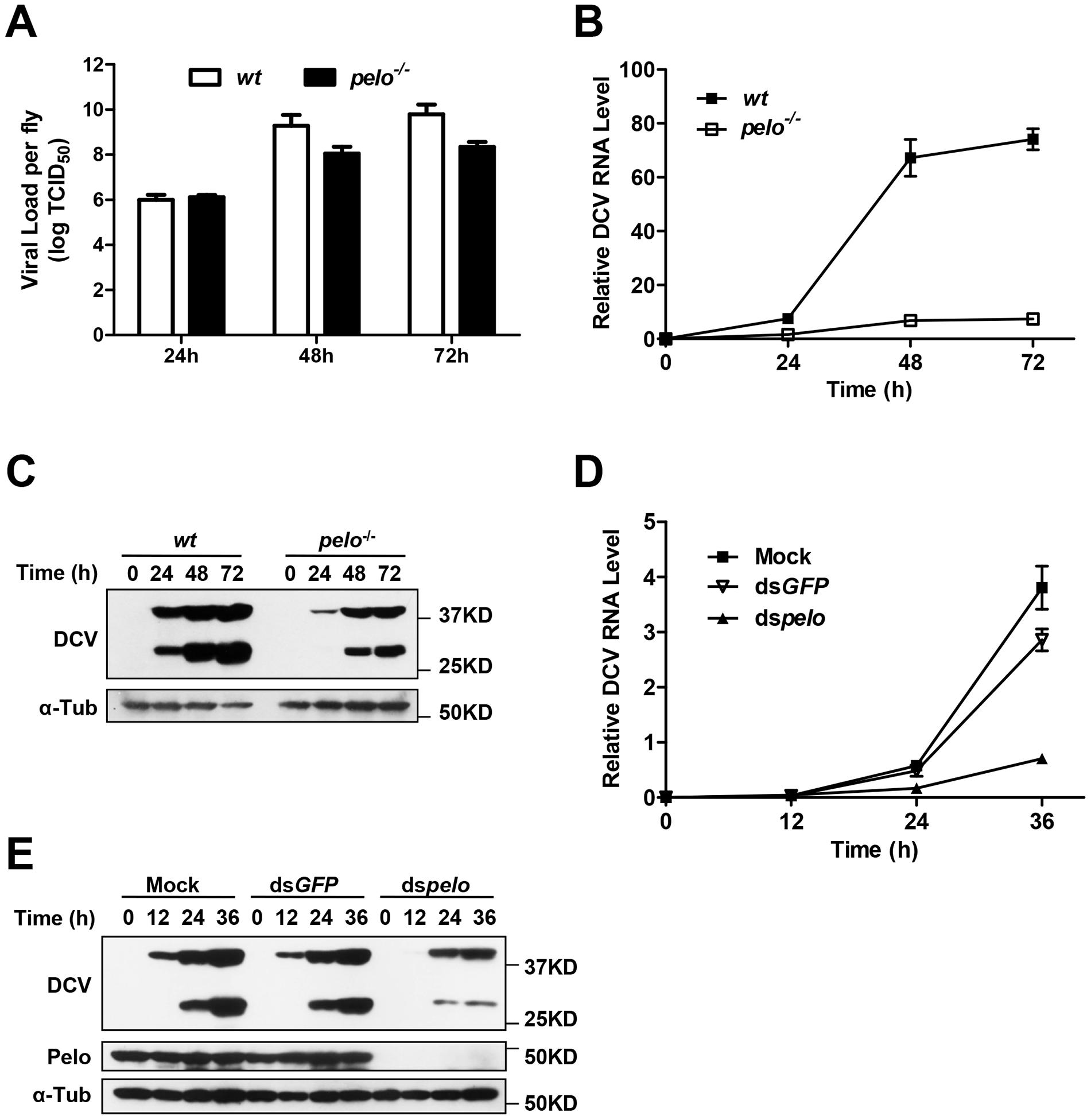 <i>pelo</i> deficiency inhibits viral replication.