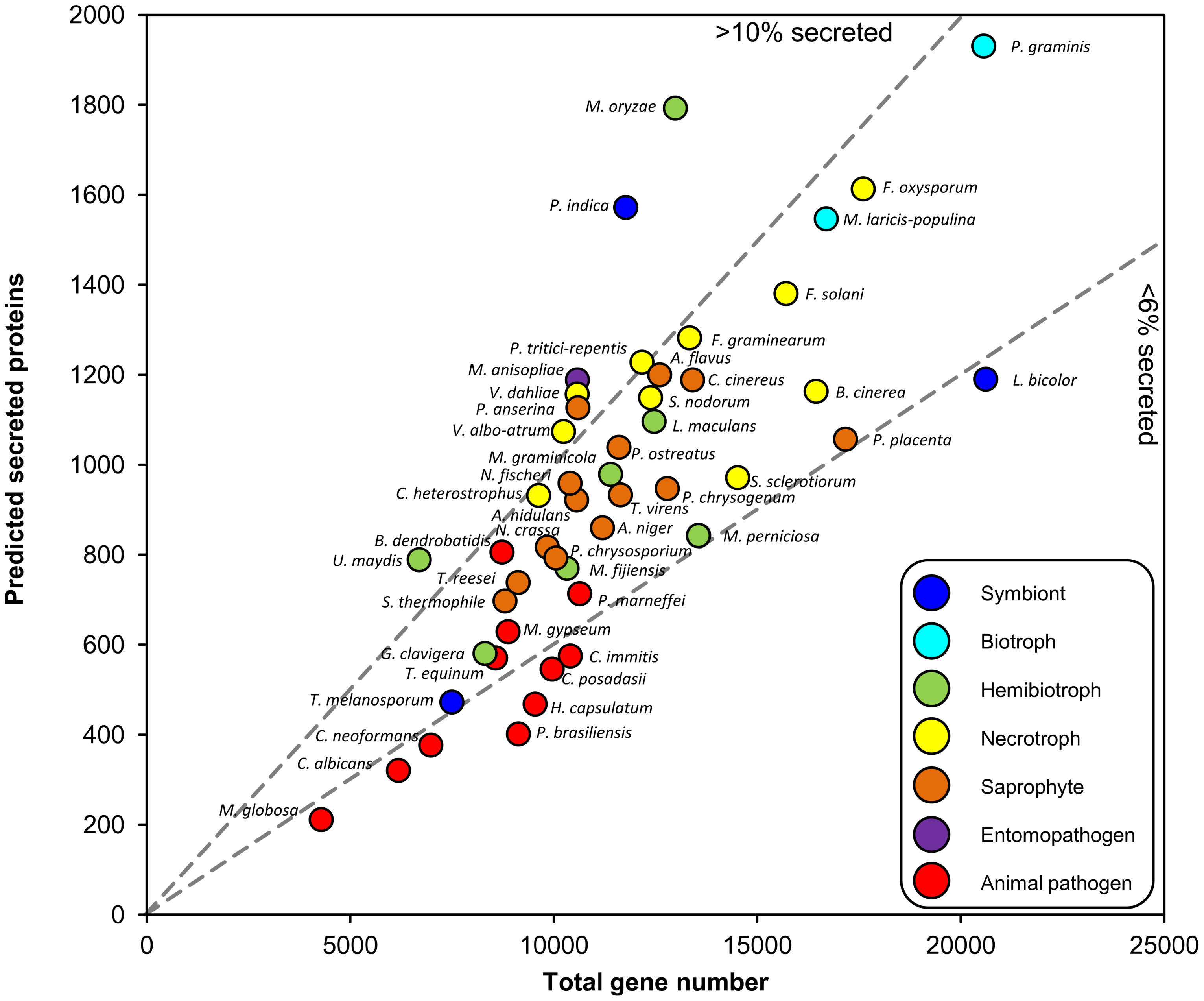 Relationship between predicted secreted protein number and total gene content of fungi.