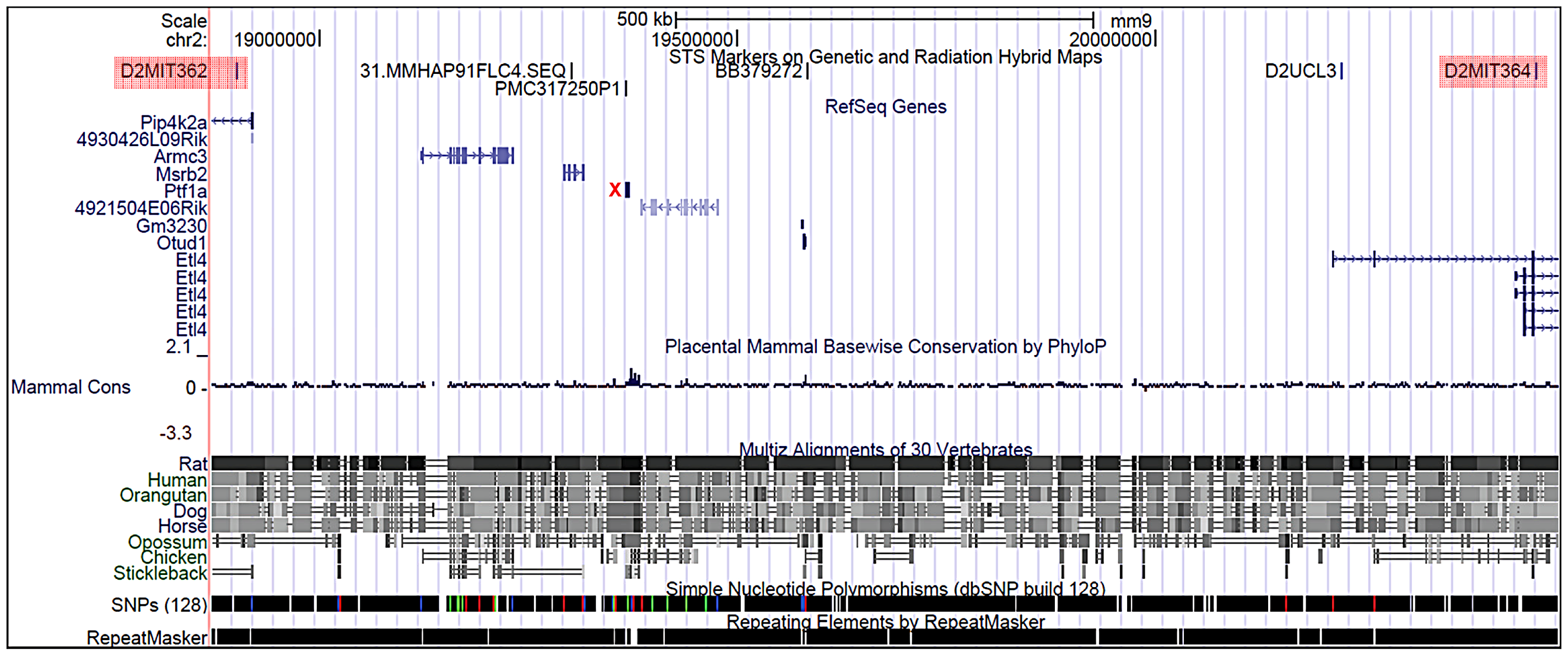 Physical map of the <i>Sd</i> critical region as viewed on the UCSC genome browser (