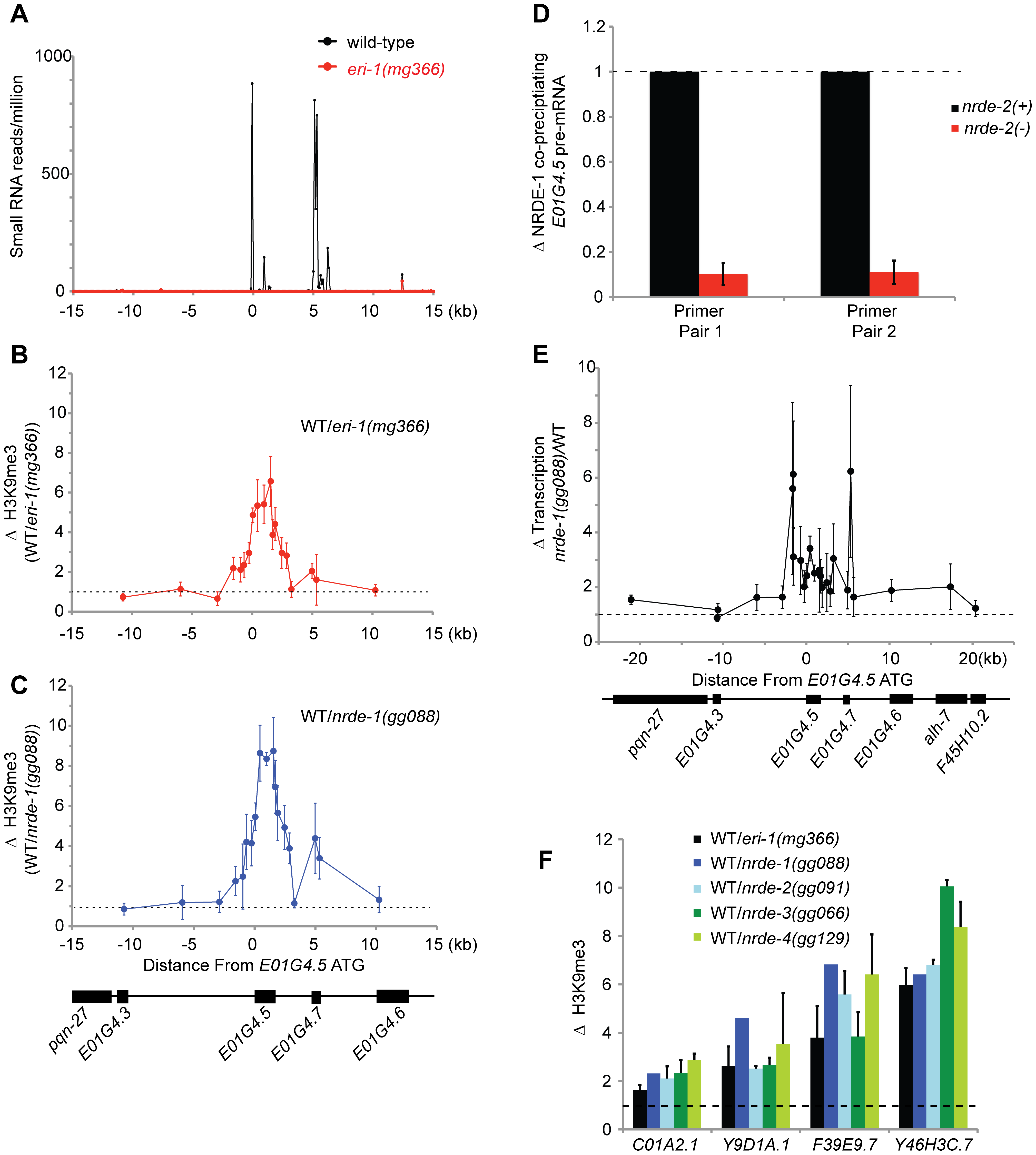 Endo-siRNAs promote H3K9 methylation.