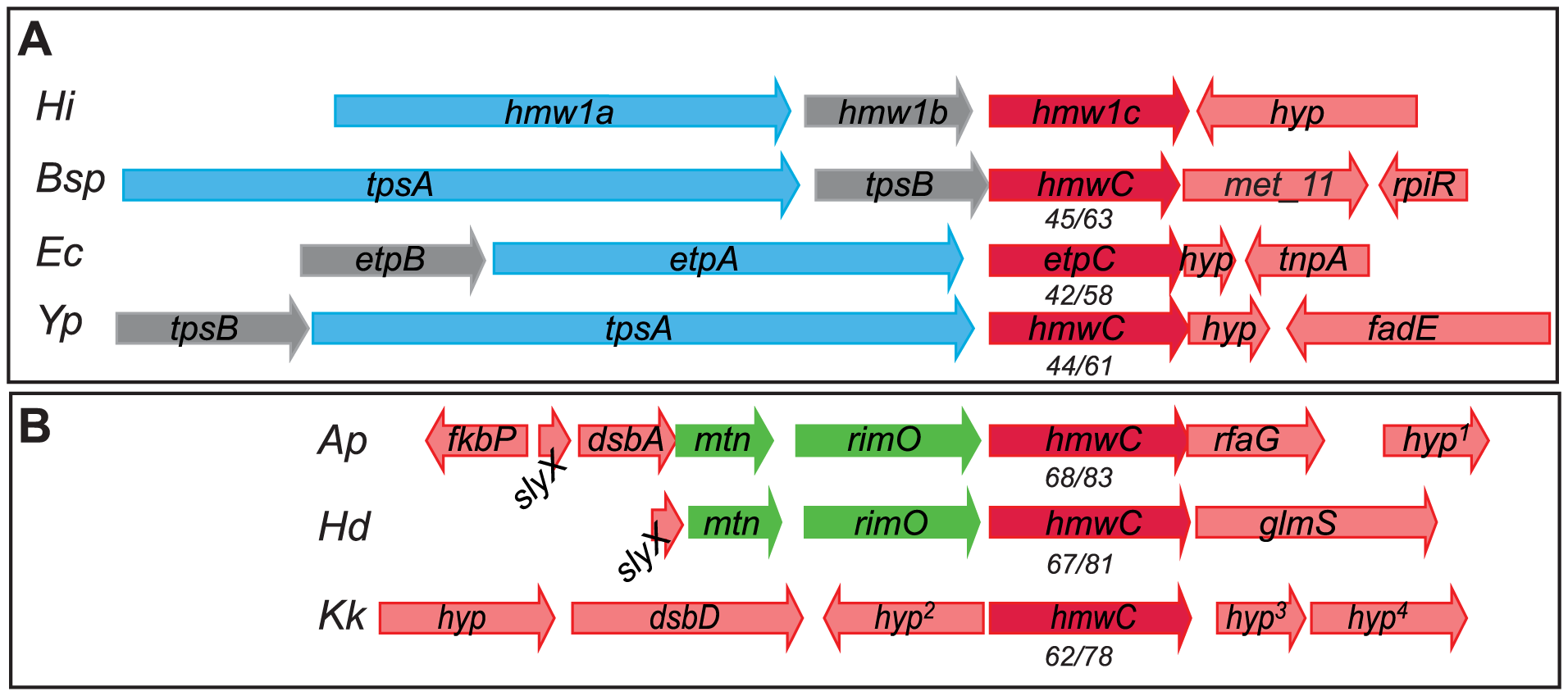 HMW1C-like proteins in two categories: Those encoded by loci that contain obvious substrate genes and those encoded by isolated genes without adjacent substrate genes.