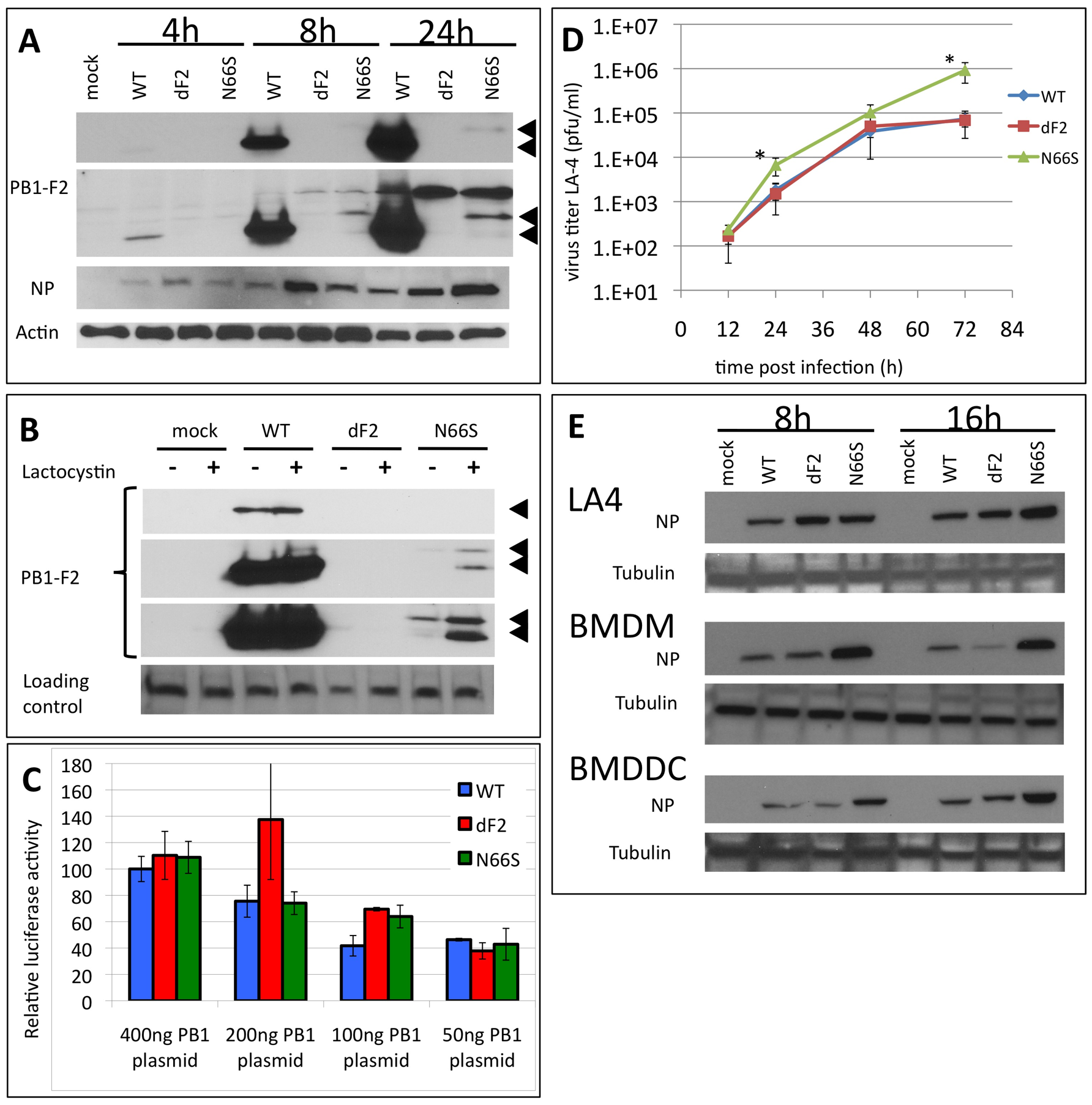 Effects of PB1-F2 expression on replication of A/Viet Nam/1203/2004 in murine cells in vitro.